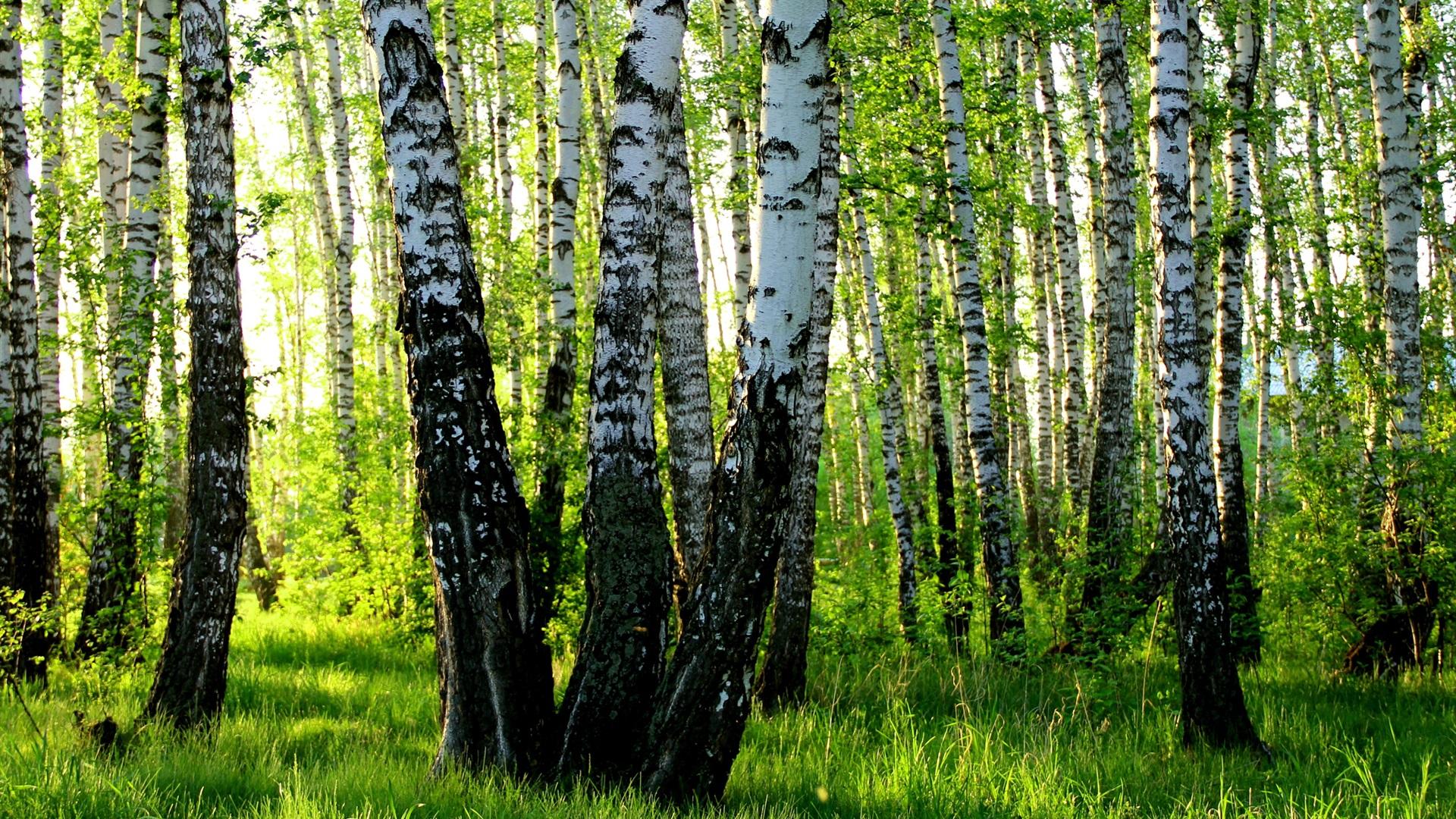 лес фото на пк