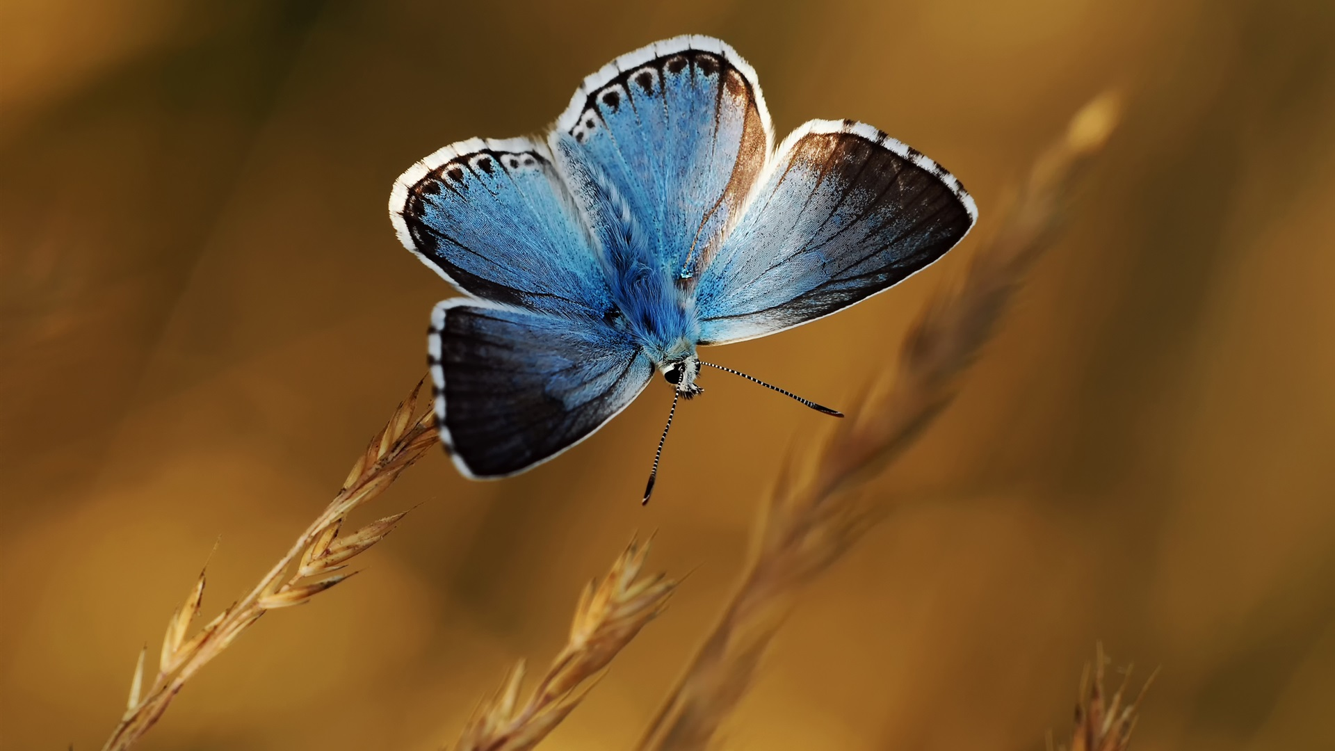 blue butterflies liliesjpg - photo #2
