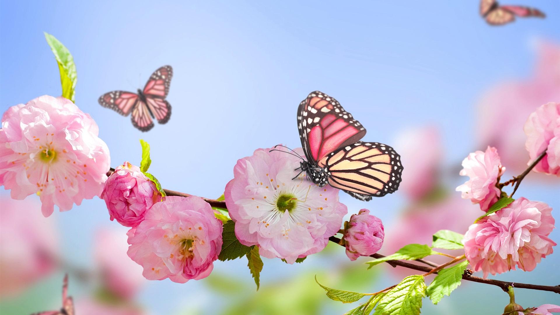 1920x1080 Full HD Hintergrundbilder Printemps, fleurs roses, papillons,  ciel bleu