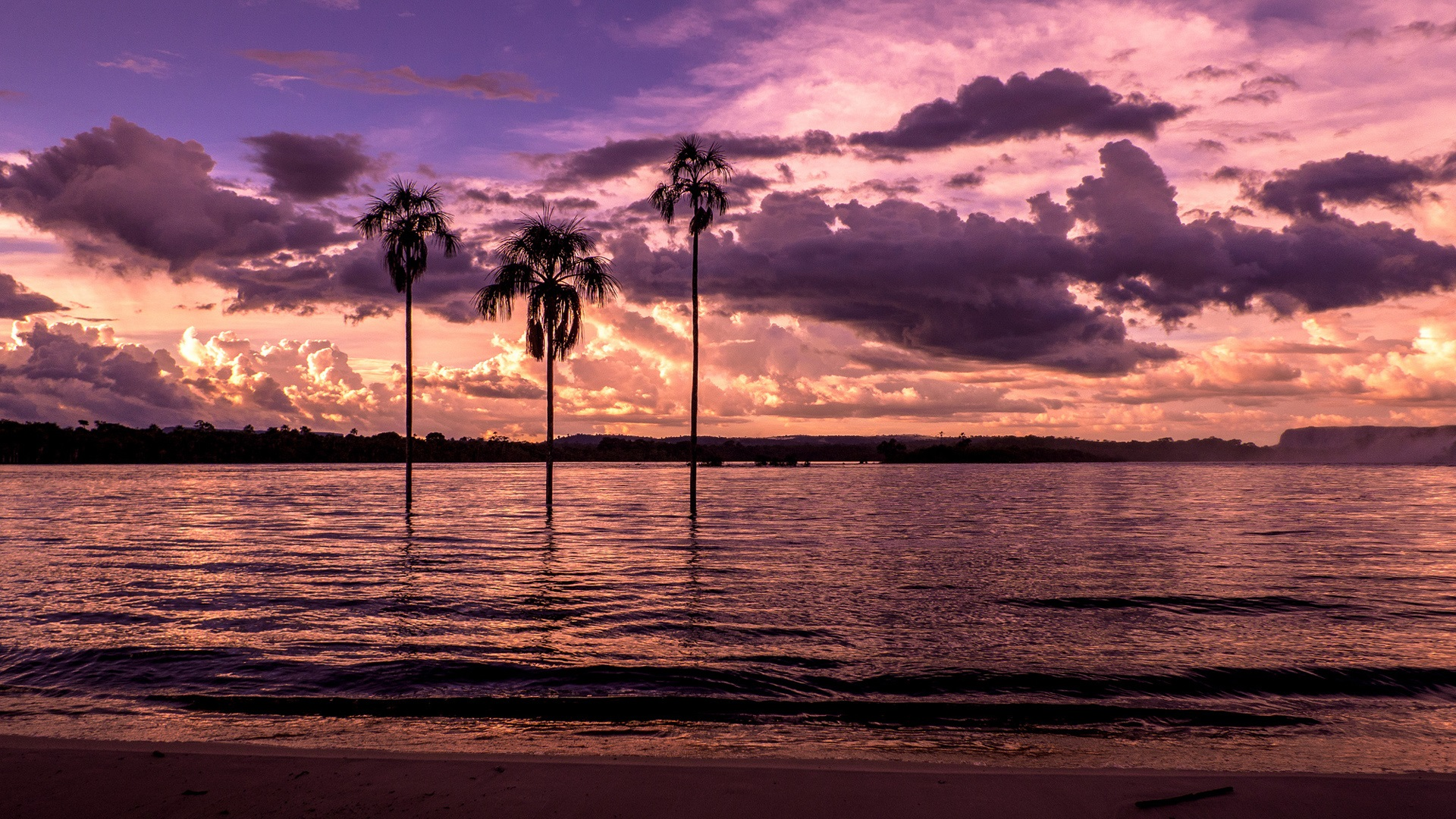 Sunset Over Beach Of Palm Trees Hd Wallpaper: Wallpaper Beach, Bay, Palm Trees, Sunset, Purple 1920x1080