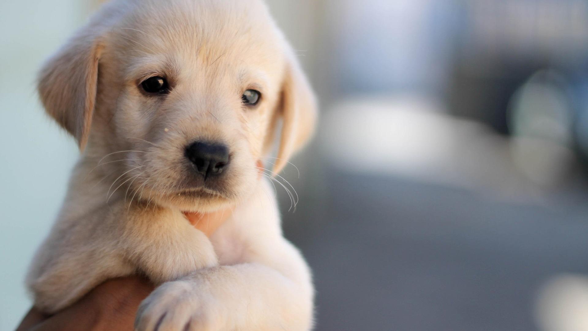 Cute Dog Images Hd Wallpapers Desktop Images Fidelity: 壁紙 かわいい子犬、犬、ペット、顔、手 1920x1200 HD 無料のデスクトップの背景, 画像