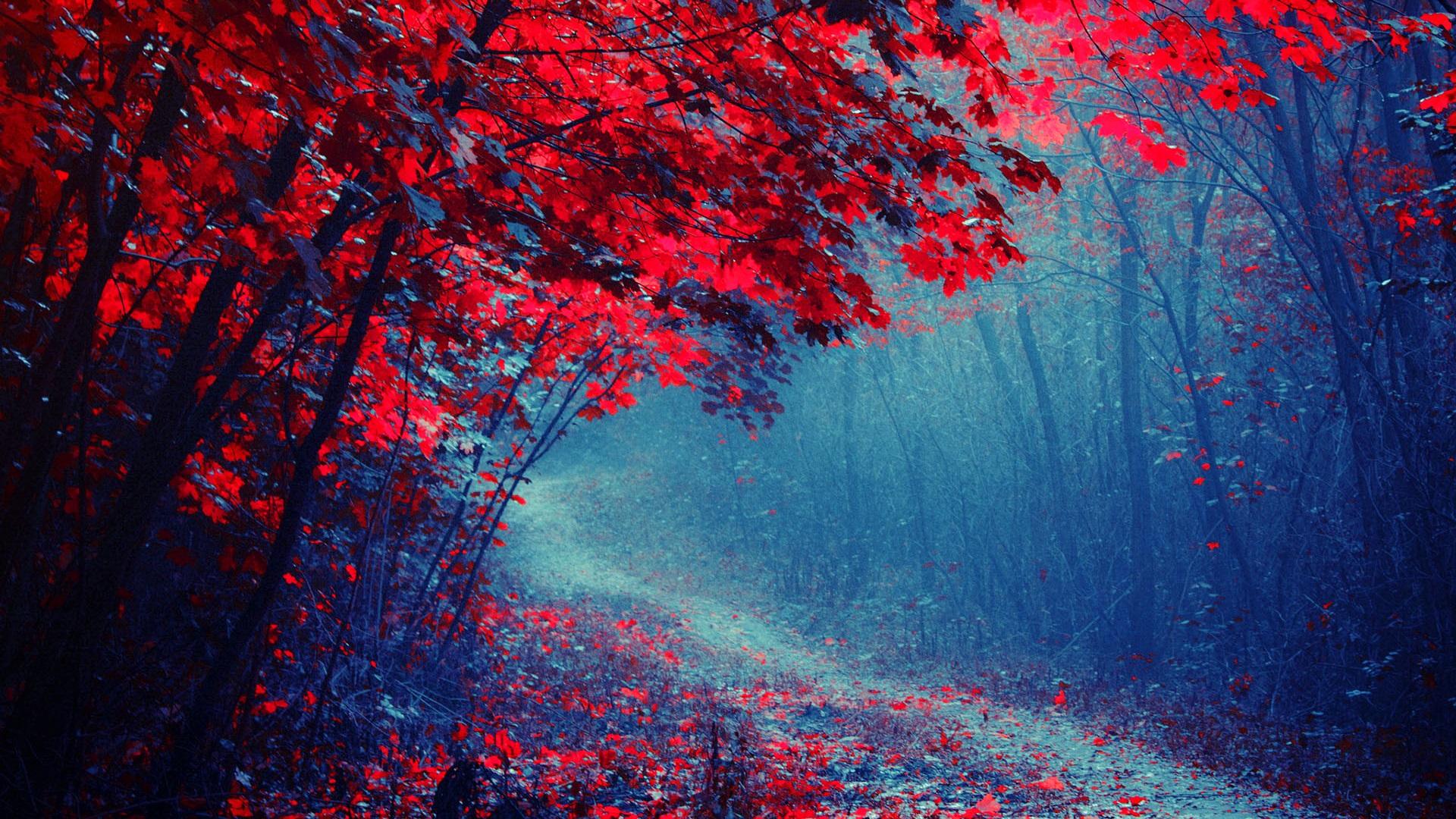 красивые картинки в красных тонах нас собраны лучшие