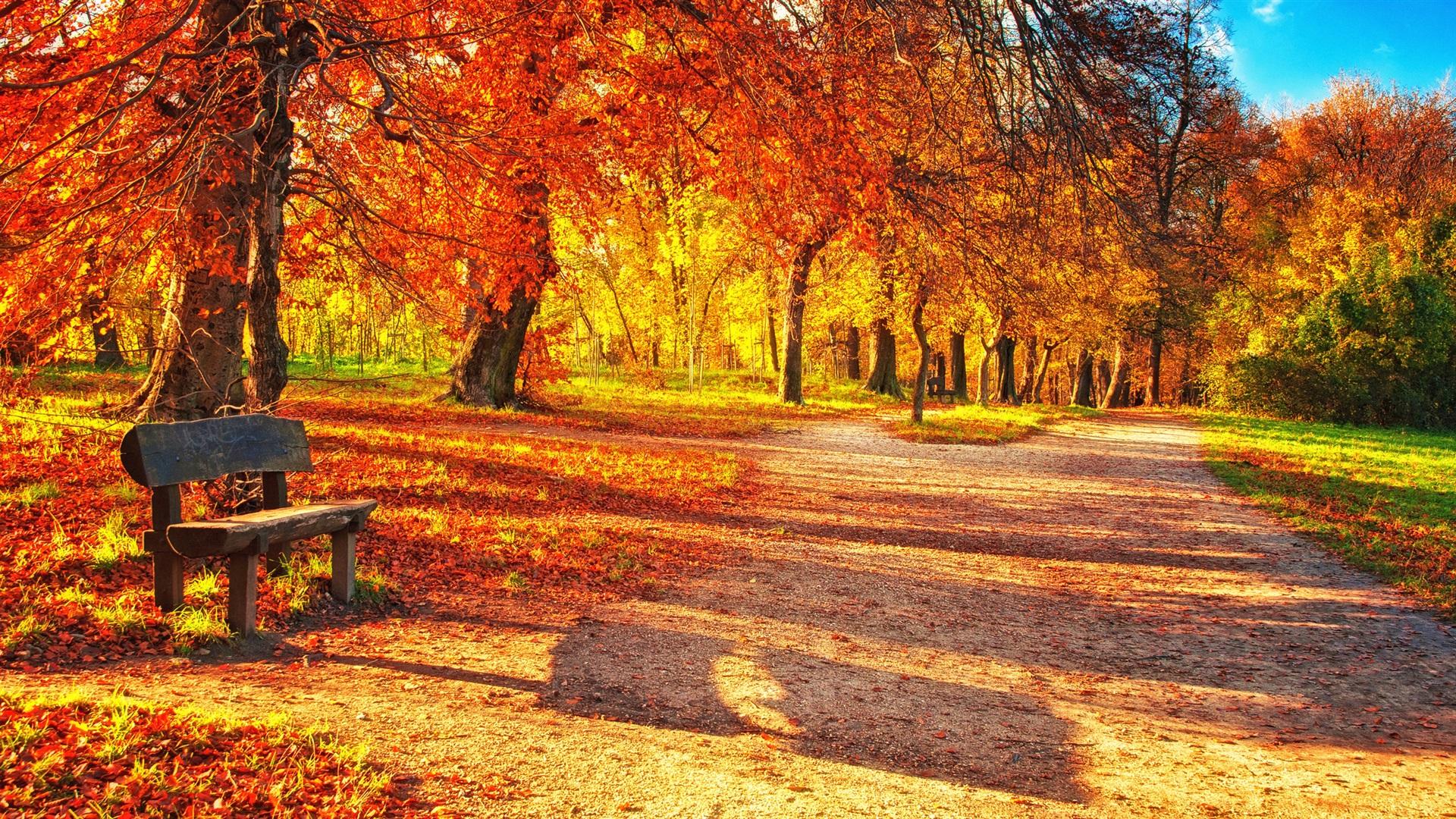 壁紙 秋の公園 紅葉 木のベンチ 日光 2560x1440 Qhd 無料の