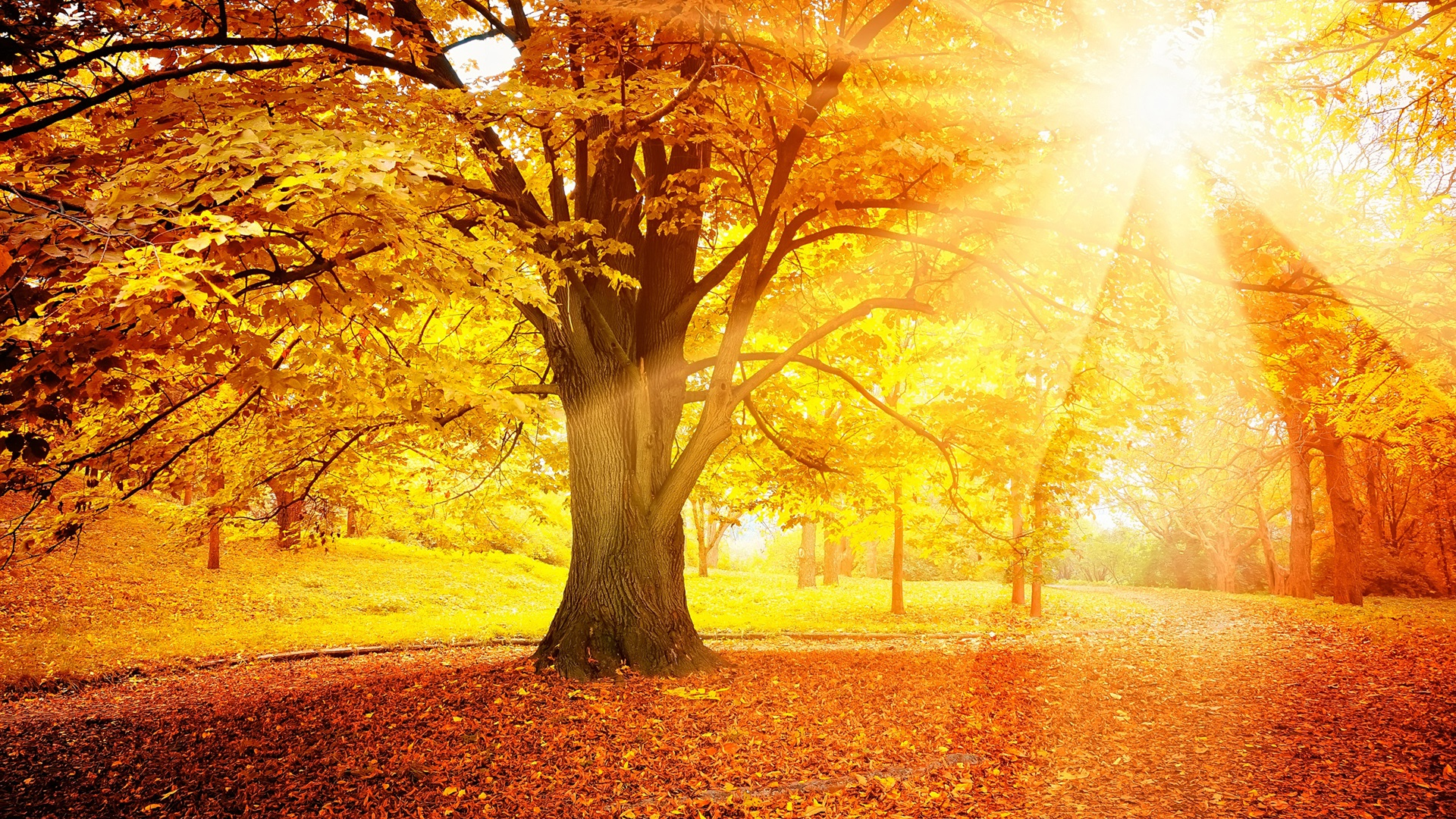 Best Used Motorcycles >> Sunset autumn, forest, yellow leaves, trees, sun Wallpaper ...