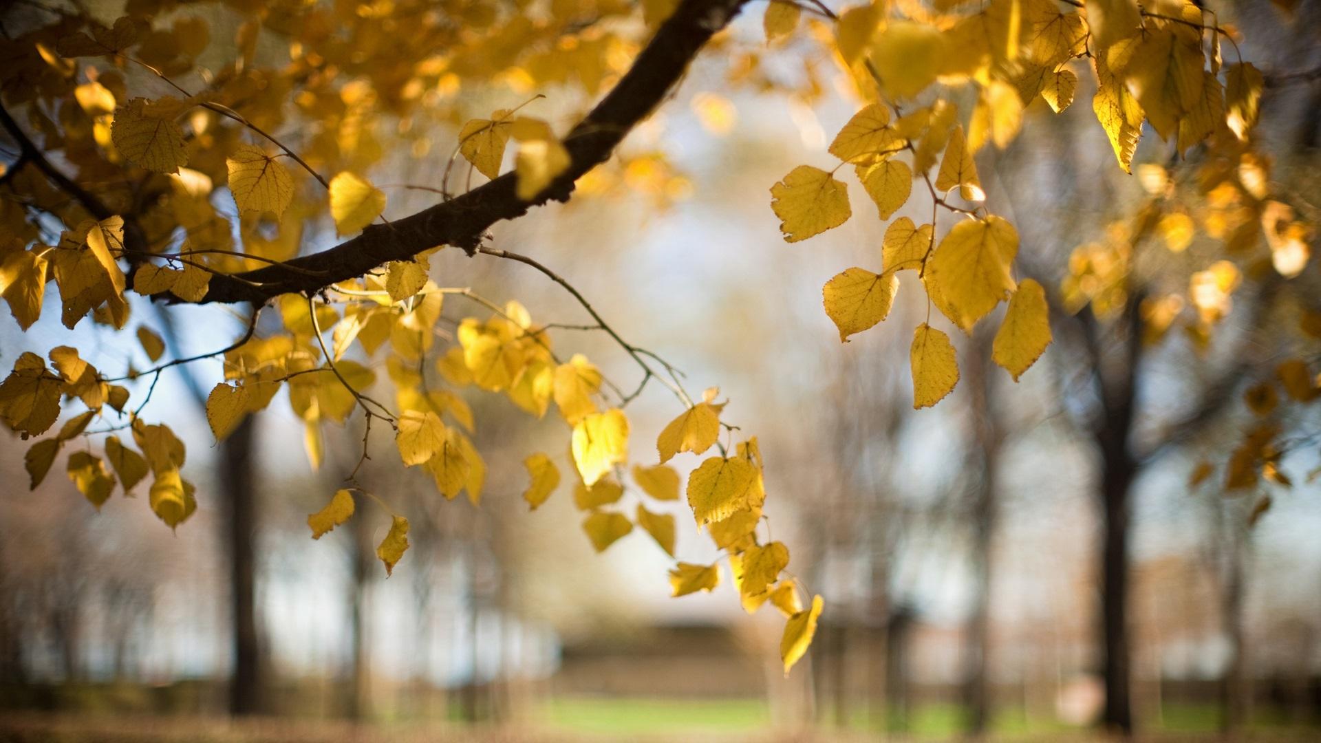los rboles las hojas amarillas oto o desenfoque