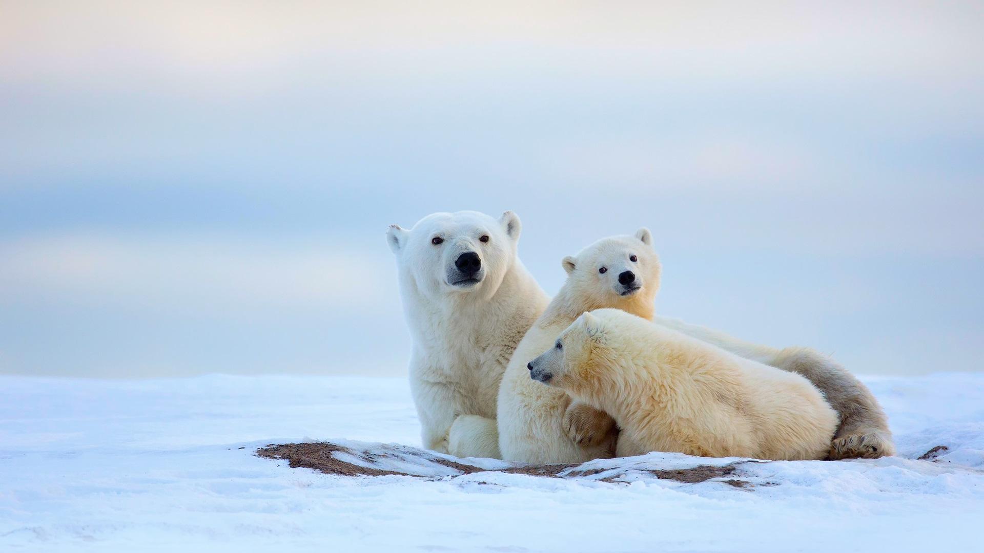 post list polar bear