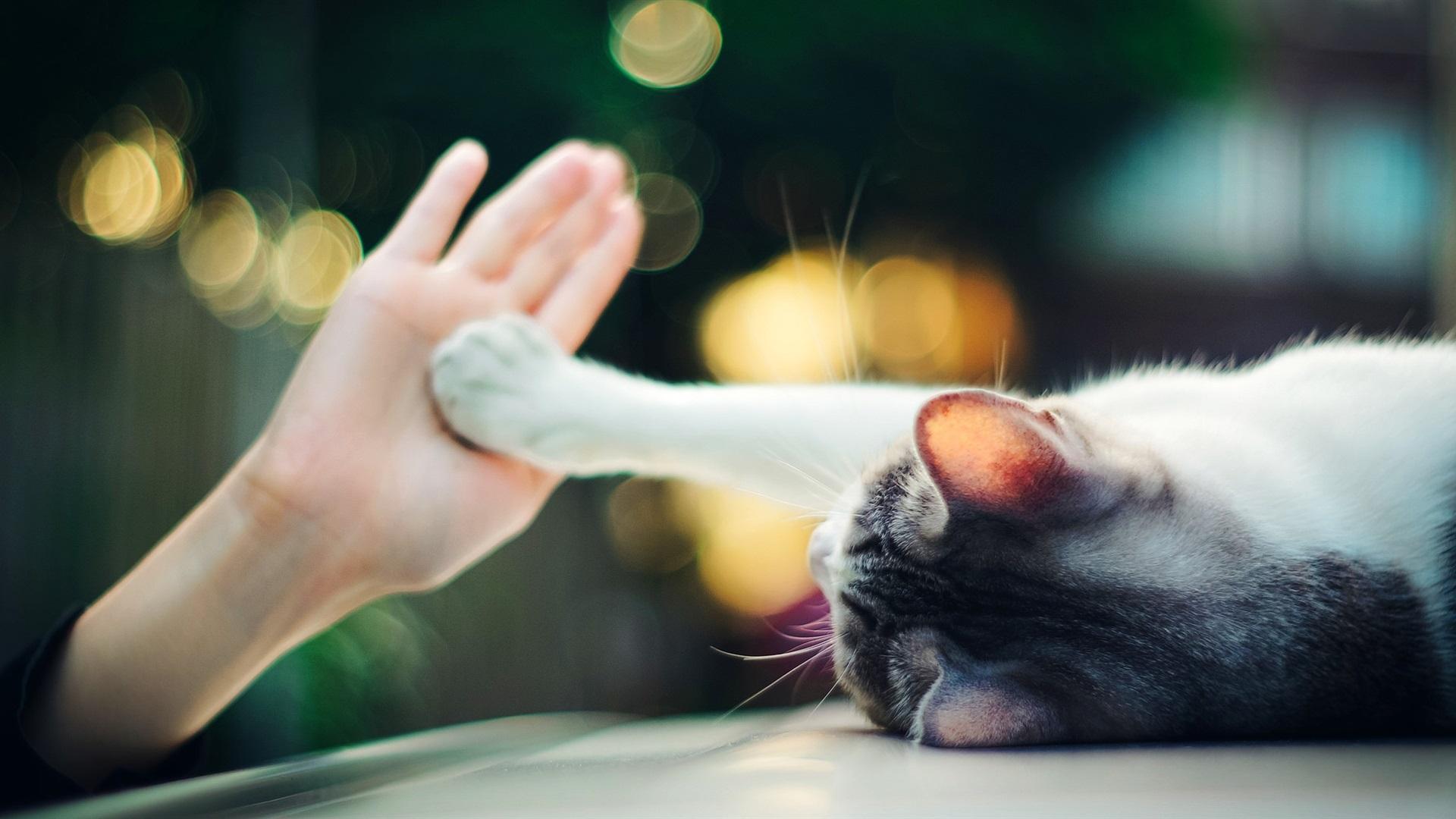 壁紙 かわいい猫のタッチの手の手のひら ボケ 1920x1080 Full Hd 2k