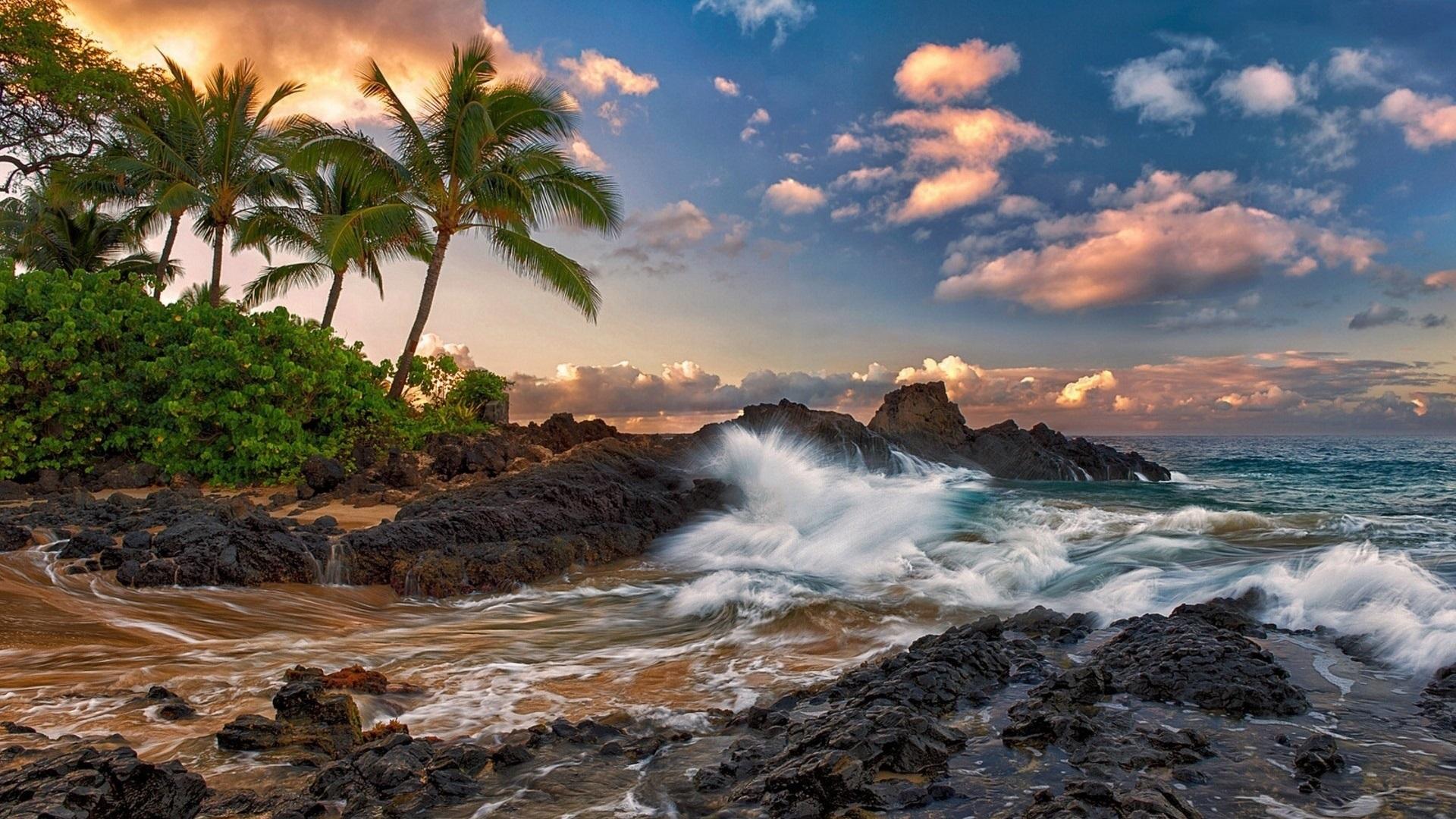 Wallpaper Maui Hawaii Quiet Ocean Rocks Palm Trees
