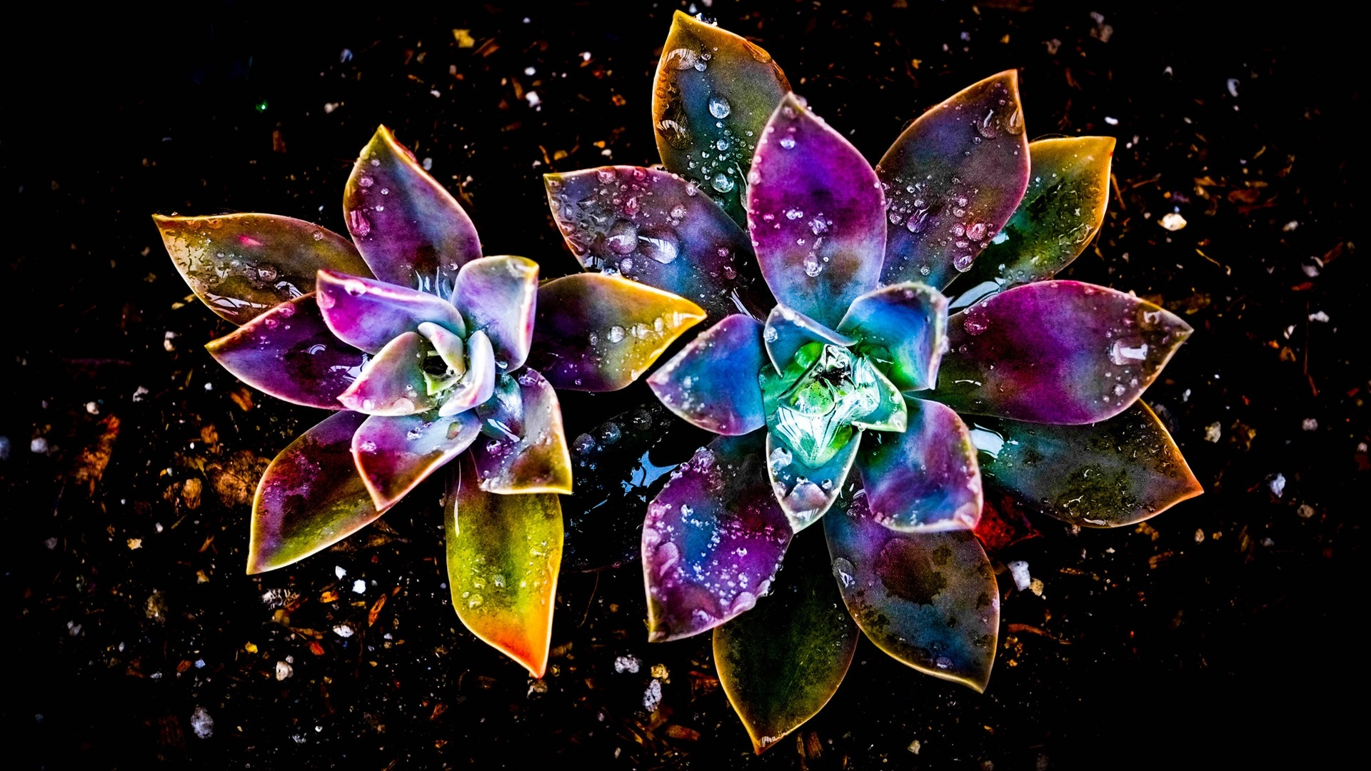 Wallpaper Colorful Flowers Abstract Water Drop 1920x1200