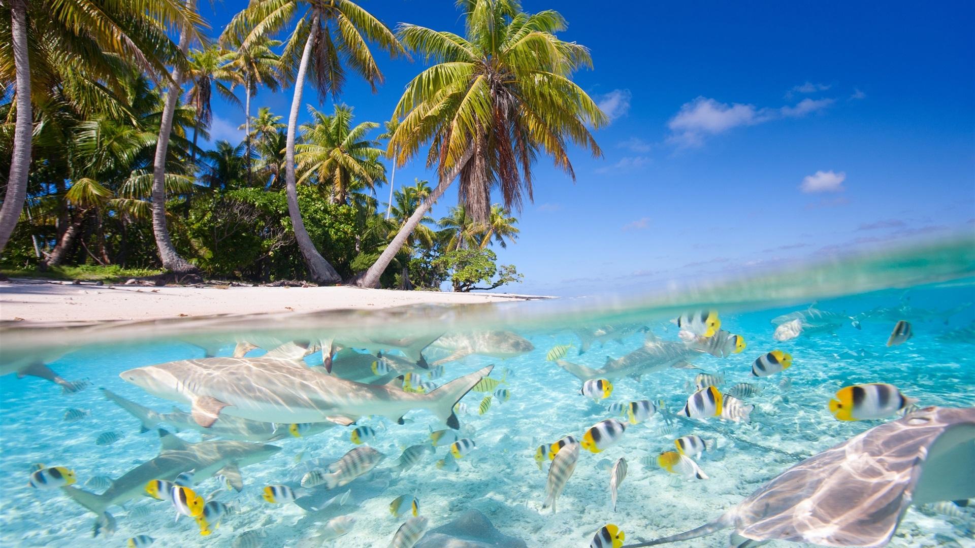 hintergrundbilder beschreibung tropische landschaft - photo #8