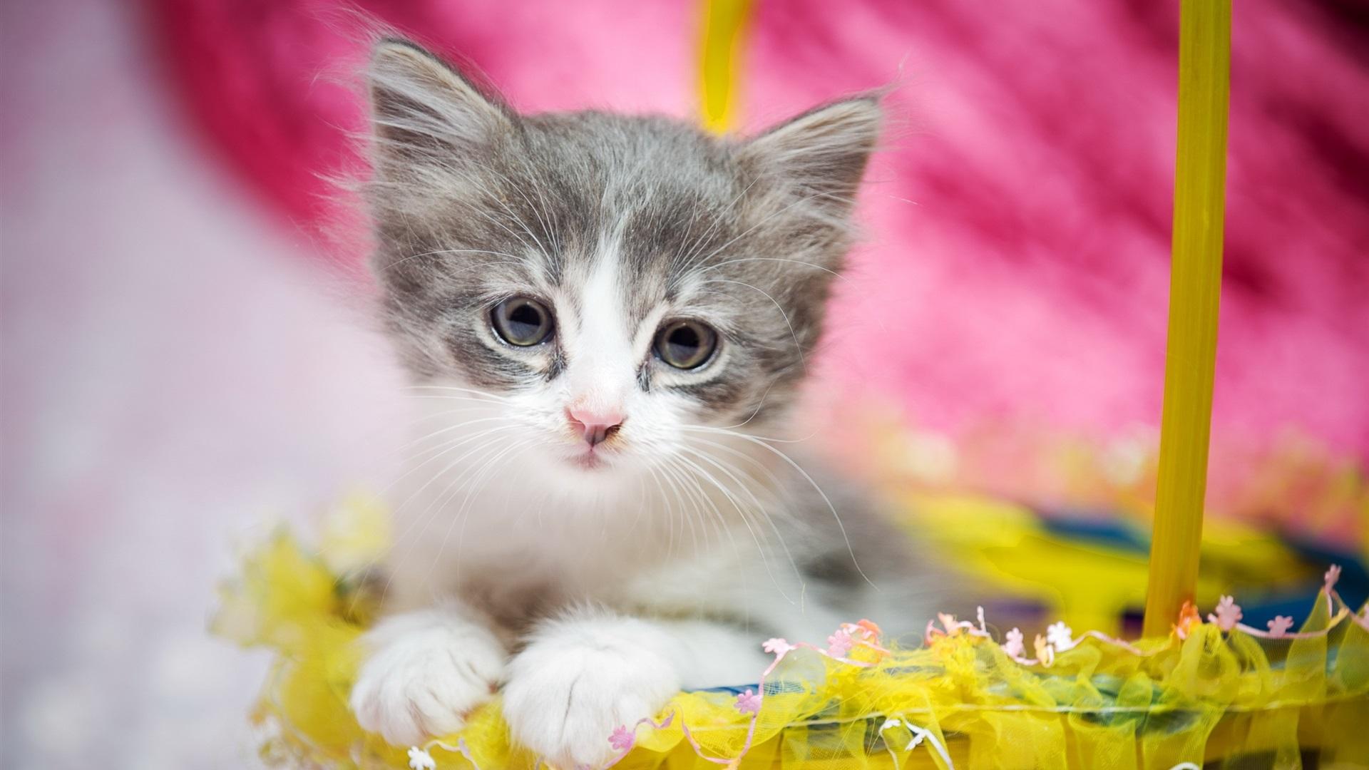 礼品 壁纸  可爱的小猫,毛茸茸,眼睛,礼品 桌布 - 1920x1080 全高清