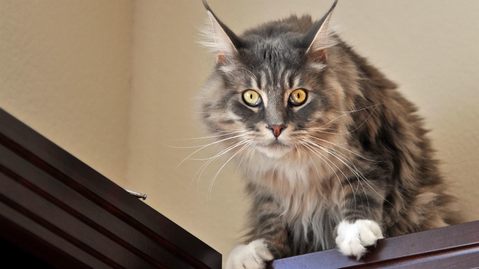 可爱的猫咪,你看,惊讶的表情 壁纸图片