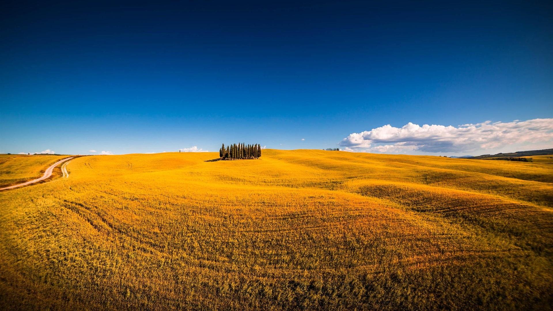 Siena, Montalcino, Sommer, Bäume, Felder Hintergrundbilder ... Trees