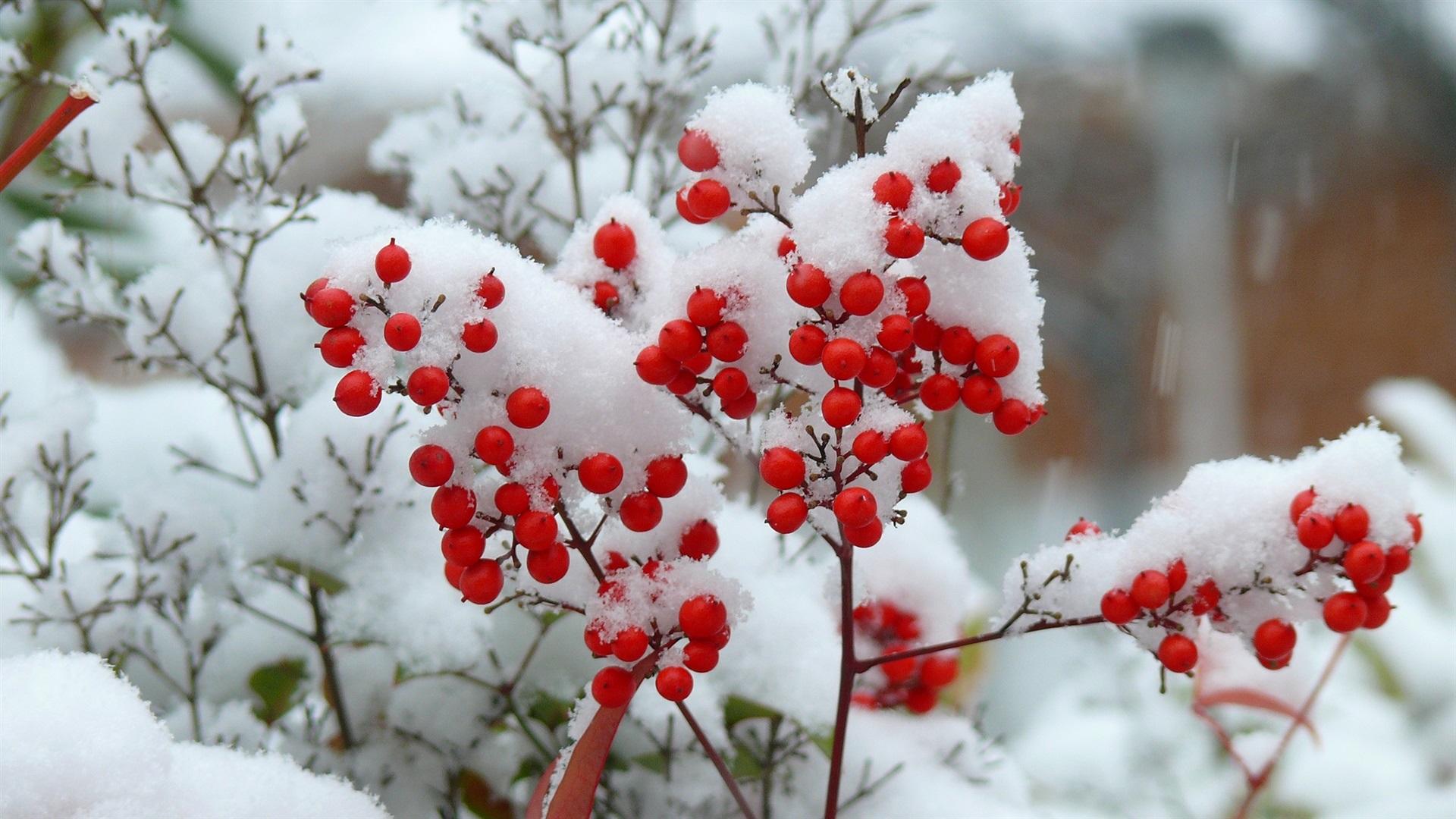 псевдотермобелье никогда заставка на рабочий стол фрукты в снегу холодное время