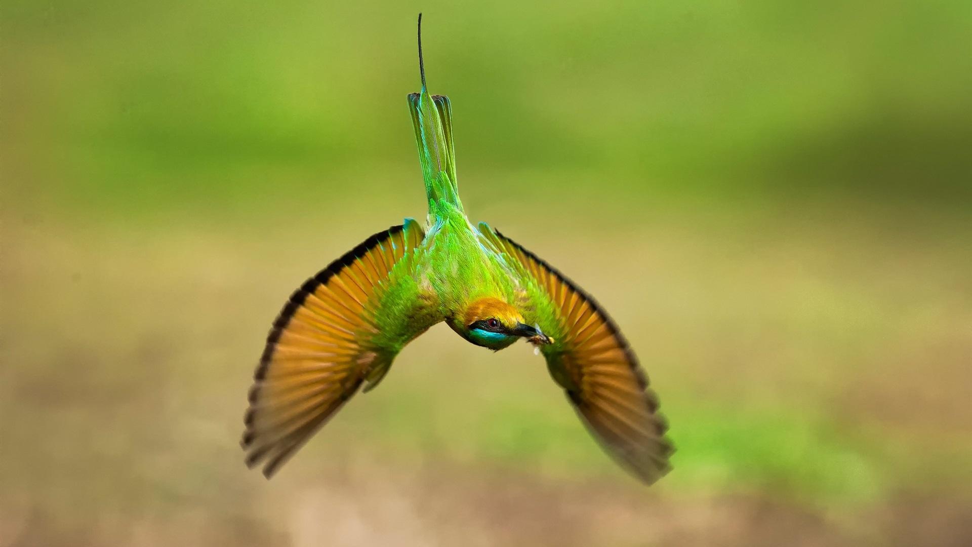 ハチドリの画像 p1_26