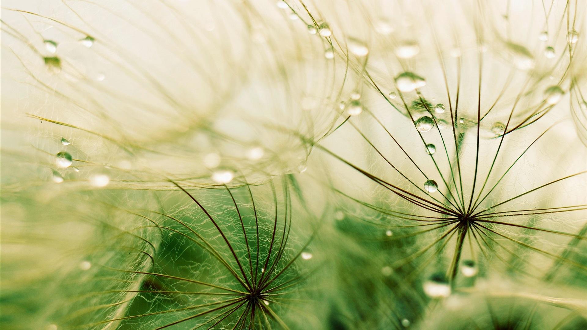 grass macro photography - photo #29