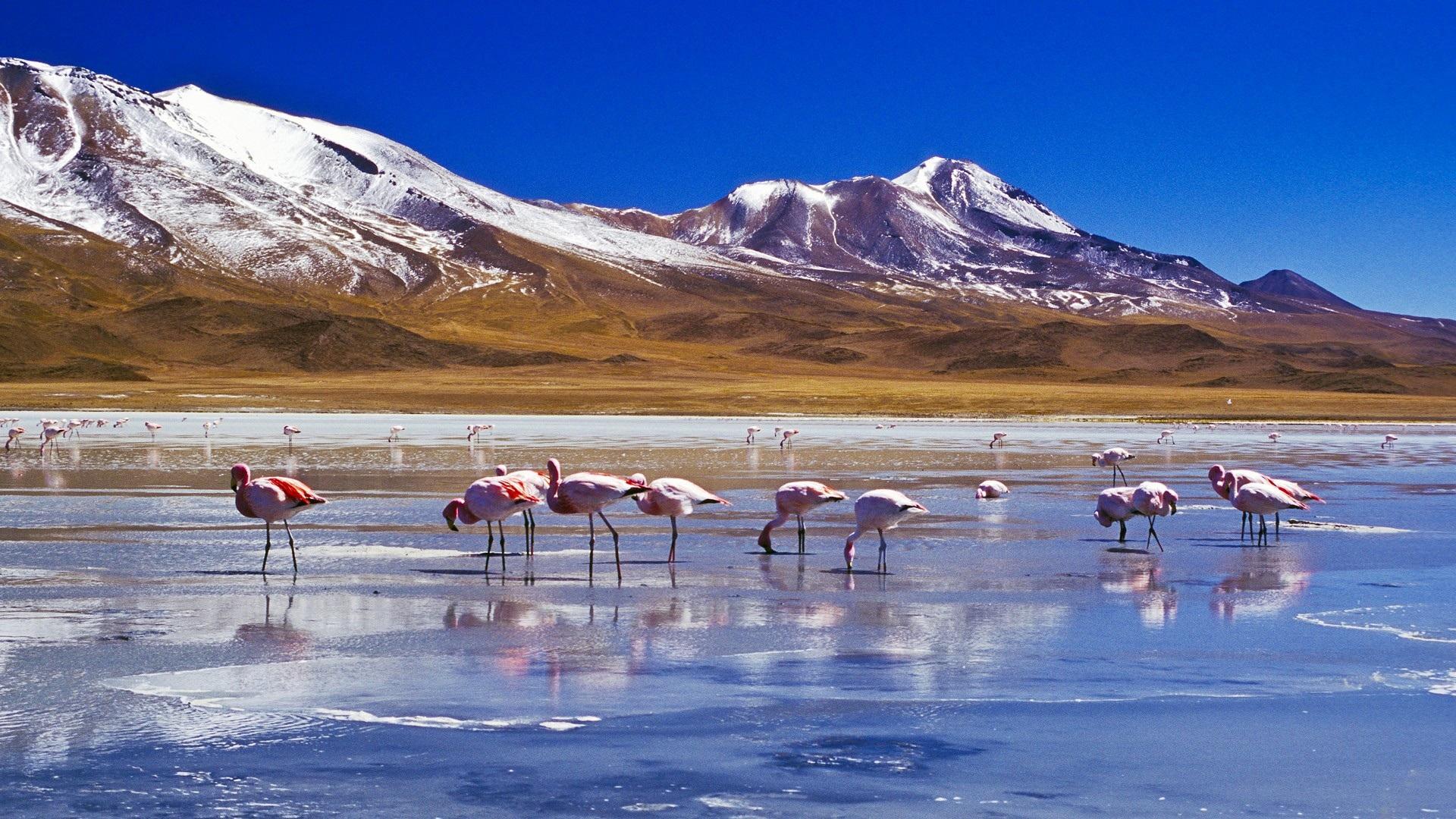 Lago Con Montañas Nevadas Hd: Fondos De Pantalla Nieve, Montañas, Lago, Pájaros