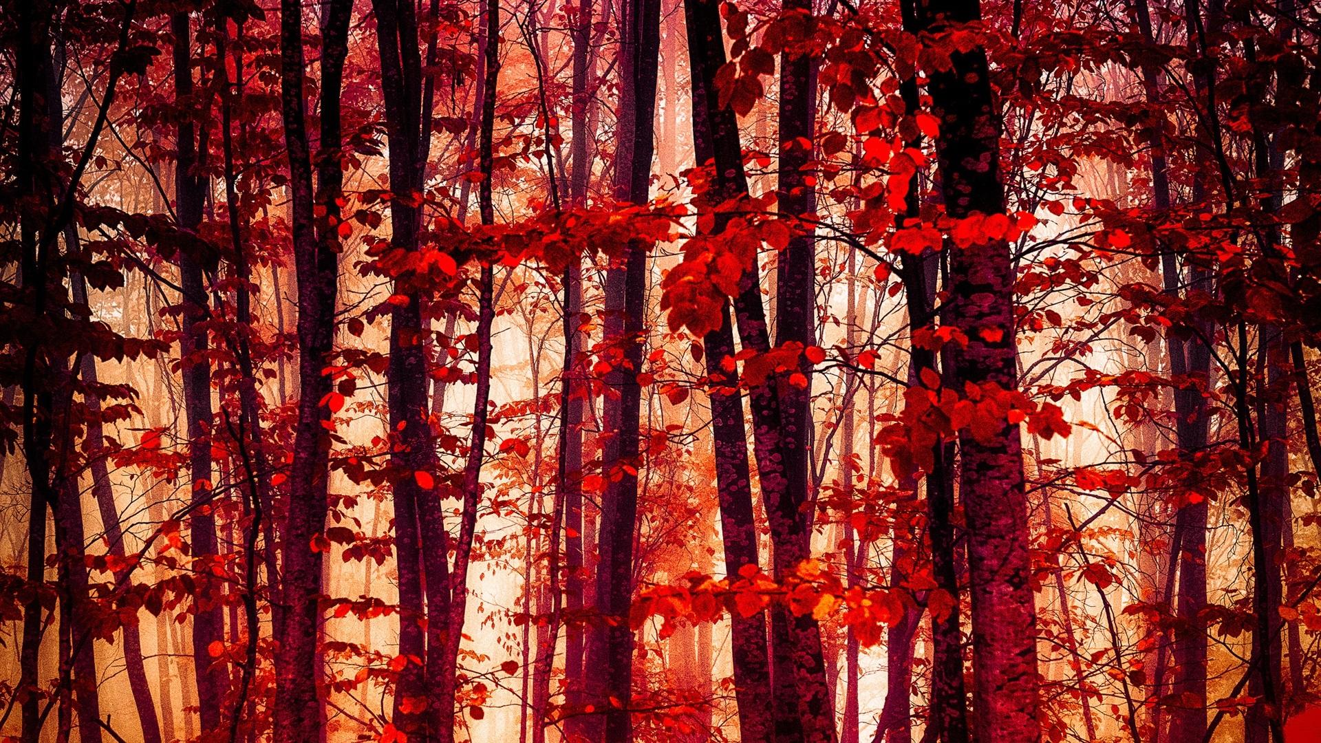 красный лес рисунок станция алмаз транспортным