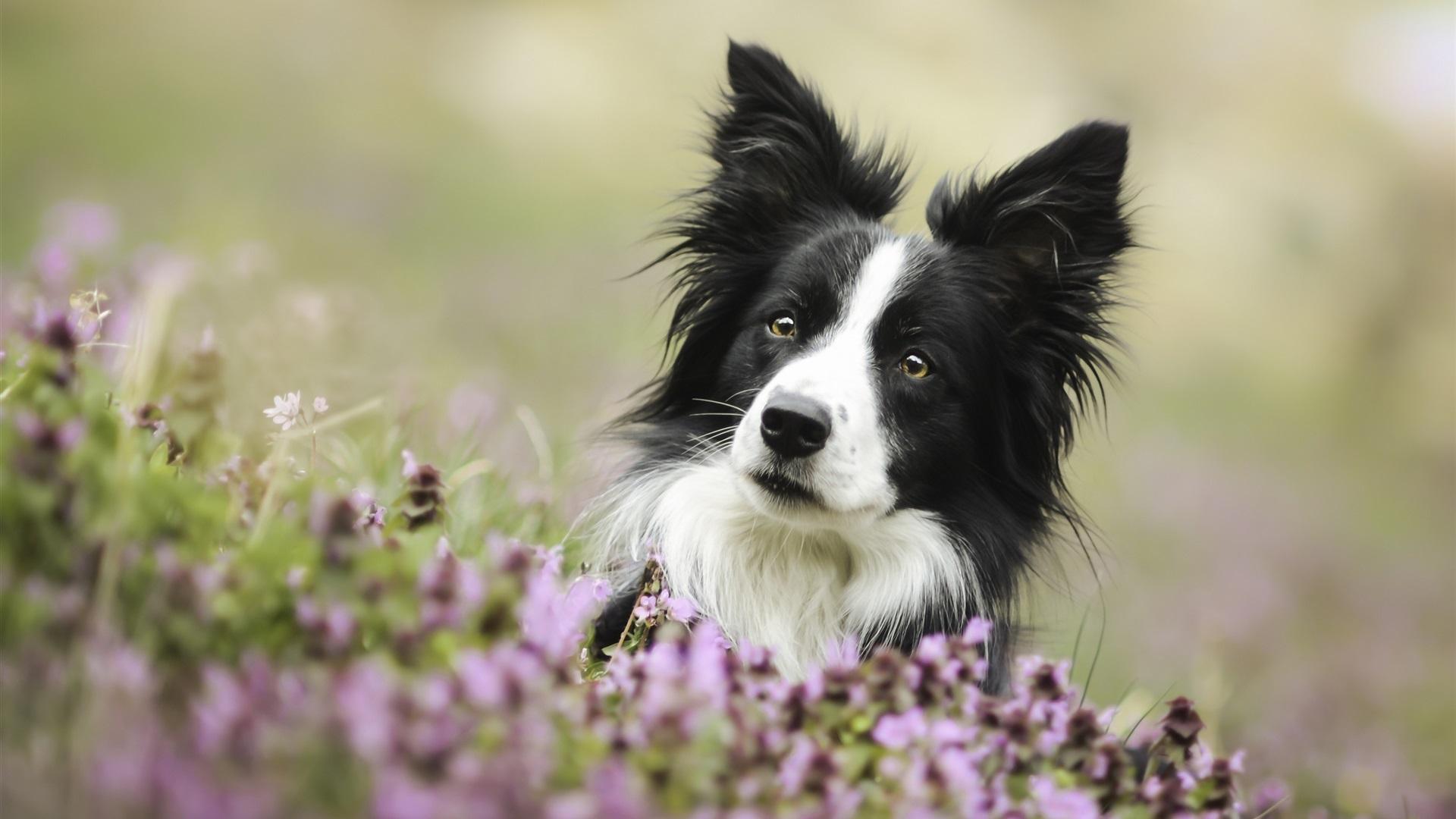Best Dog Monitor