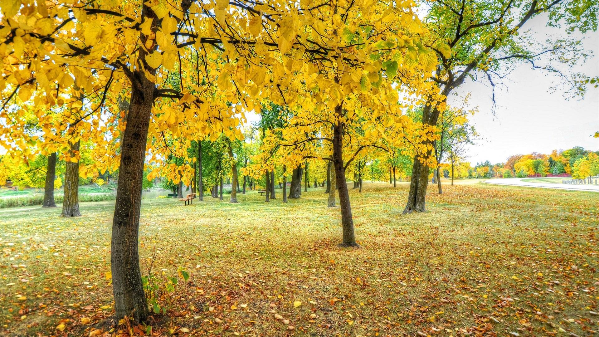 autumn park wallpaper 1920x1080 - photo #23