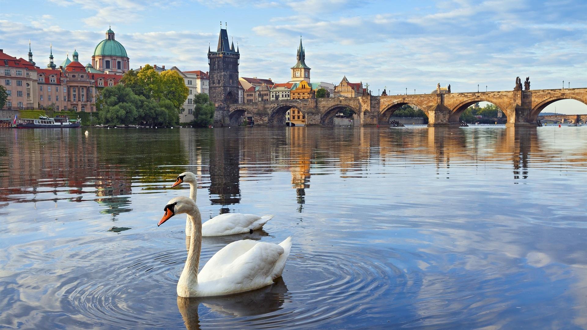 Обои Лебеди, чехия. Города foto 9