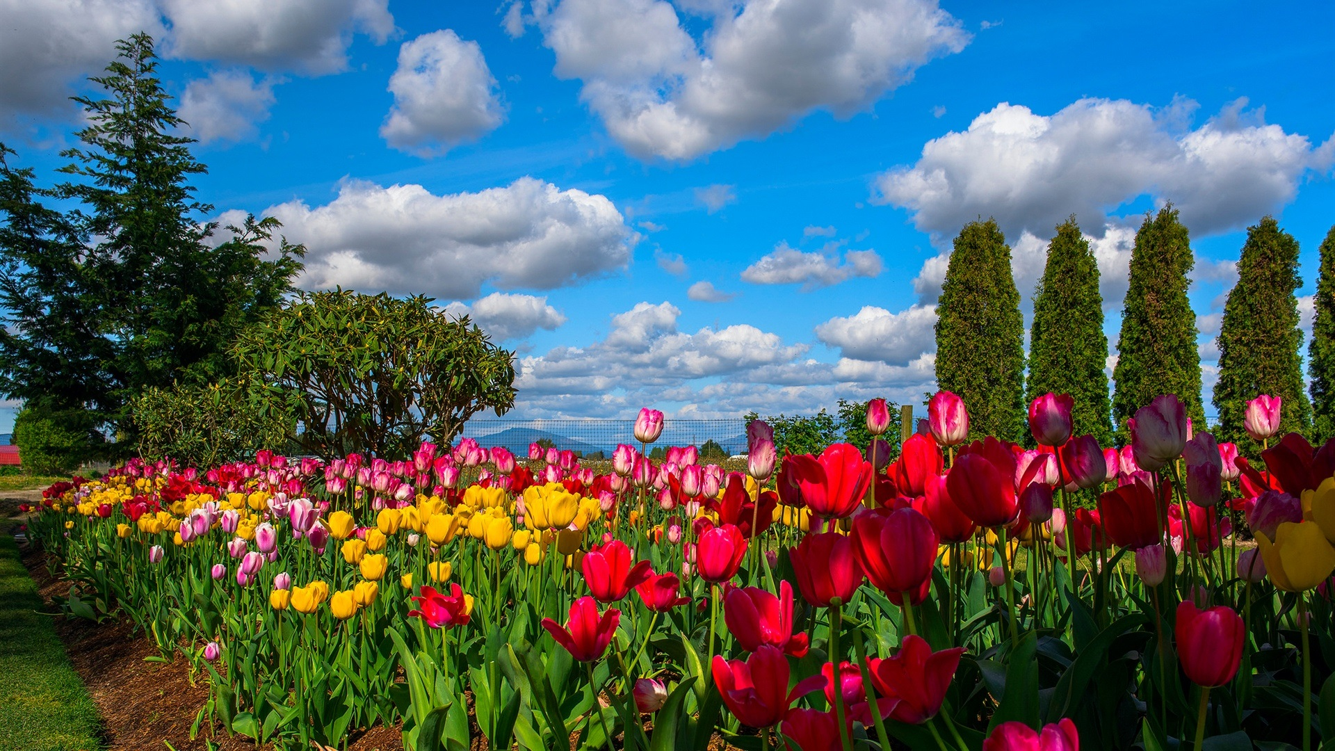 ... campo, árboles, cielo, nubes Fondos de pantalla - 1920x1080 Full HD Hd Wallpaper 1920x1080
