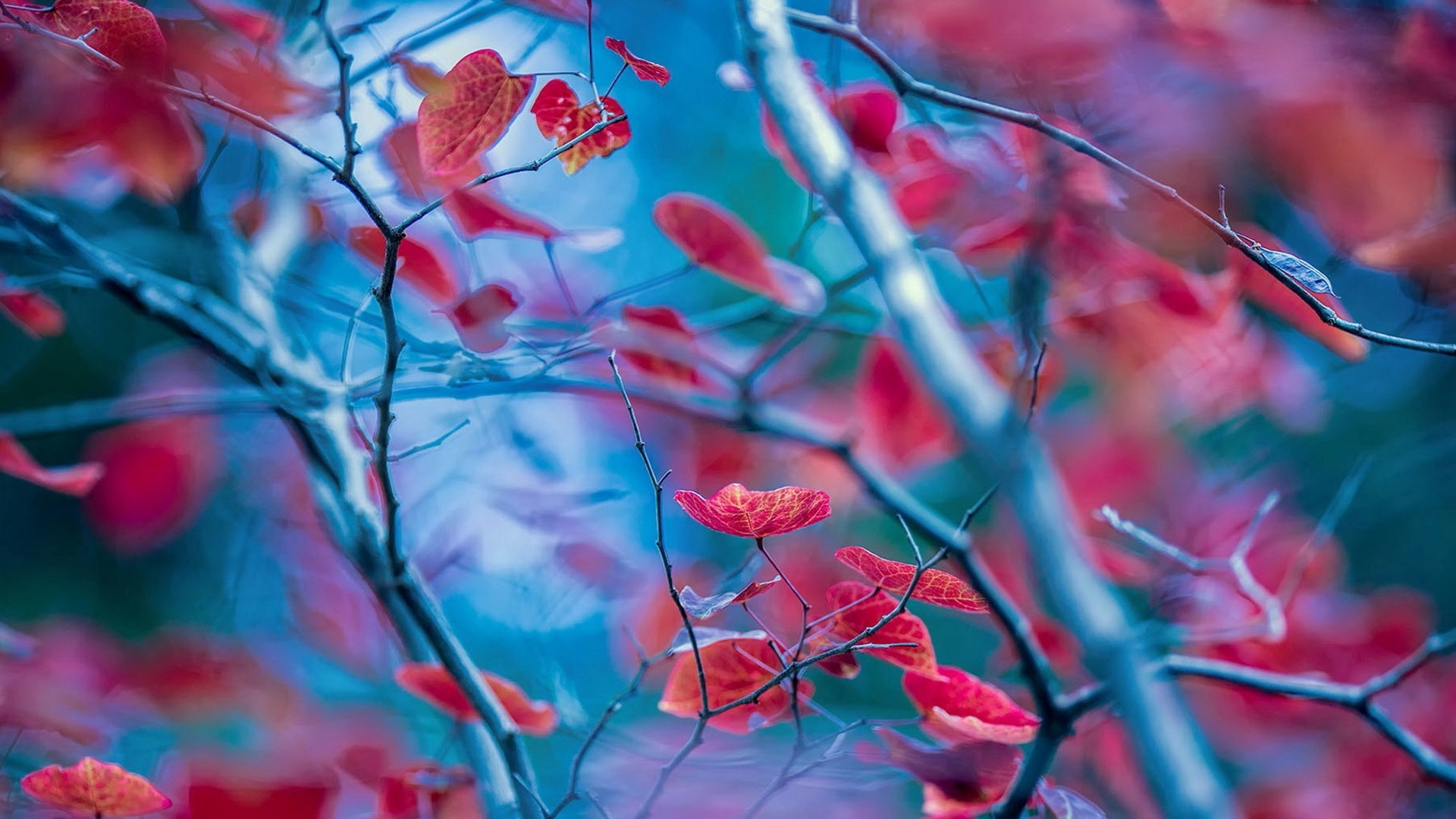 Wallpaper Red Leaves Twigs Autumn Blur Background 1920x1200 Hd Picture Image
