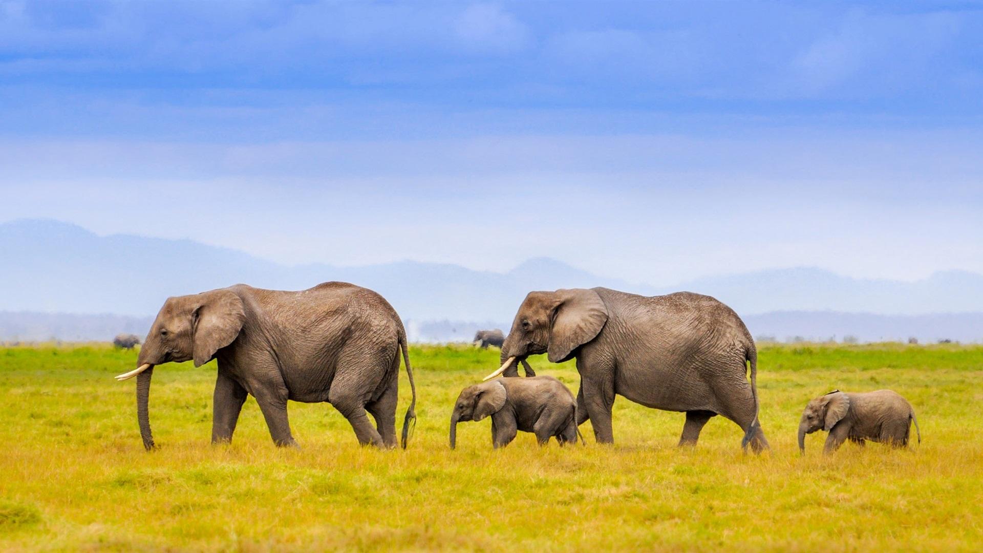 Wallpaper Elephants family, Africa, grass, blue sky ...