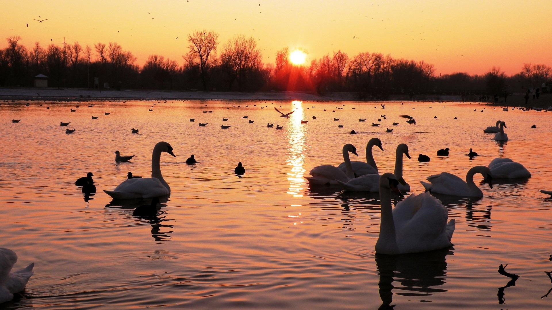 pelican обои