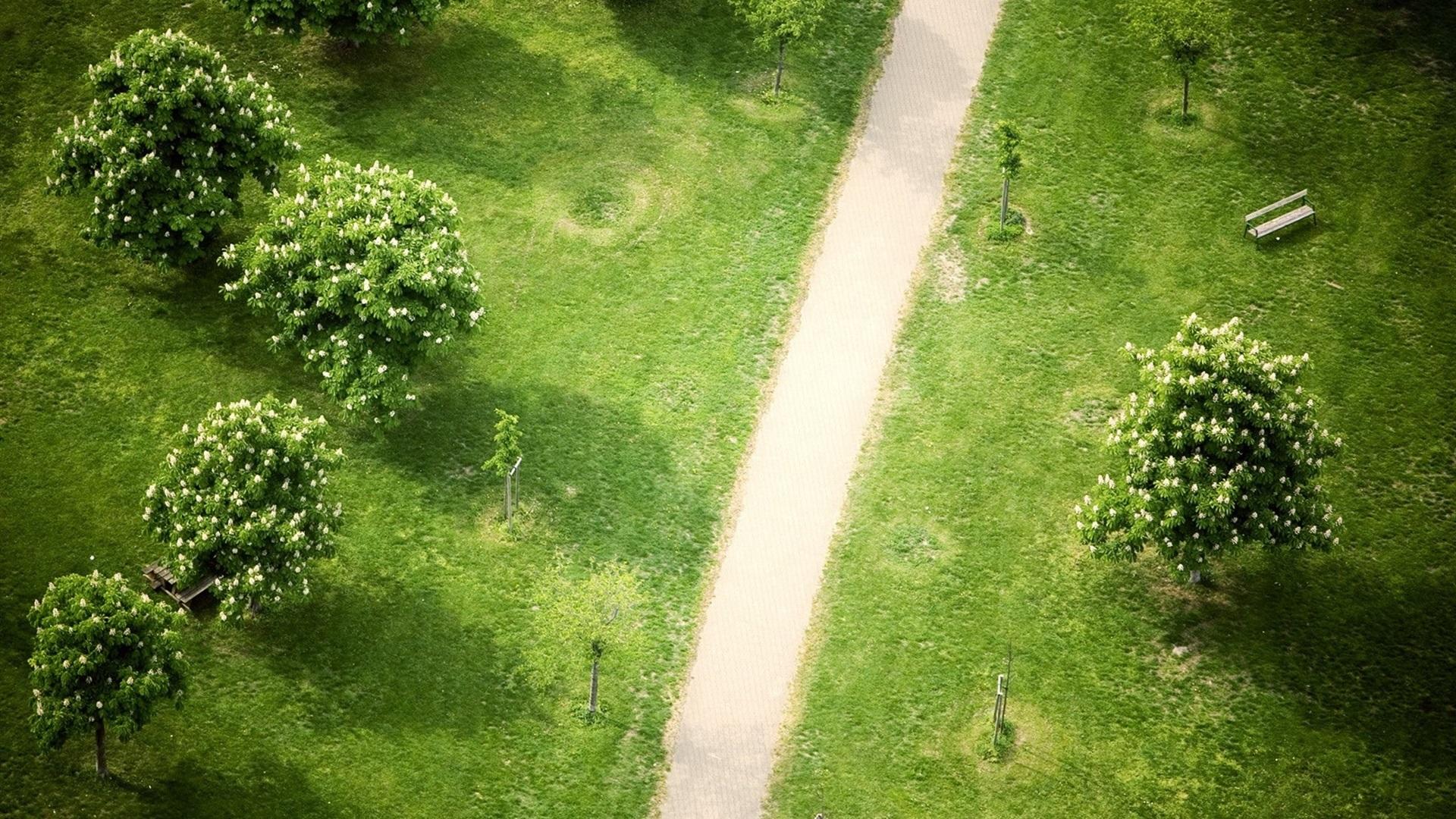 Зеленый парк отдыха без смс