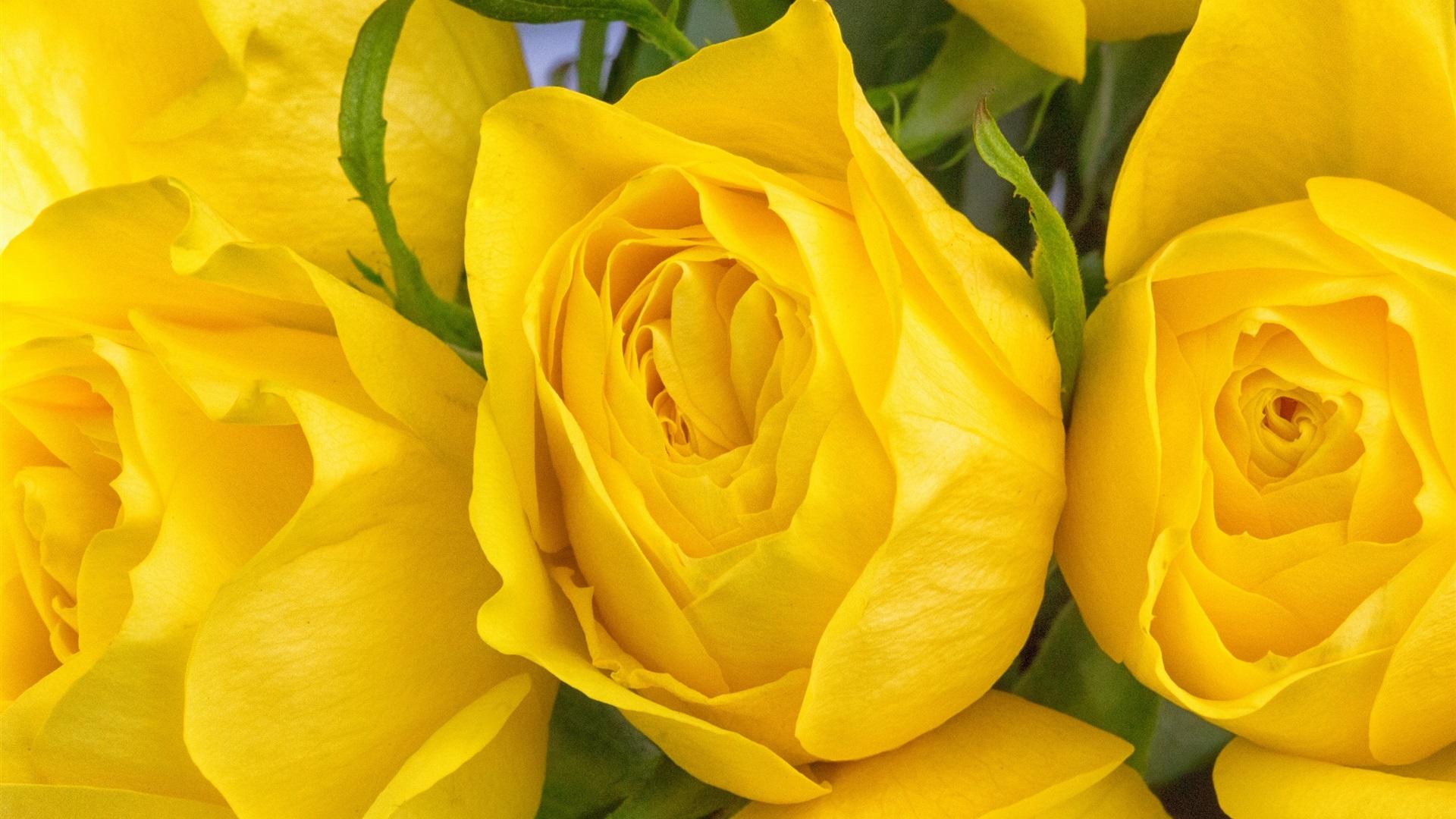 желтые розы фотографии мастера отражают
