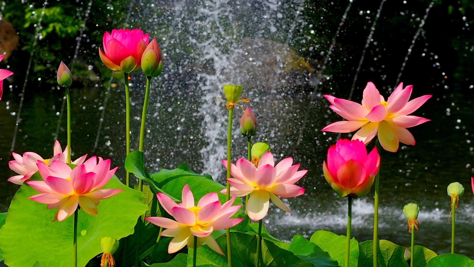 обои на раб стол цветы вода № 635544  скачать