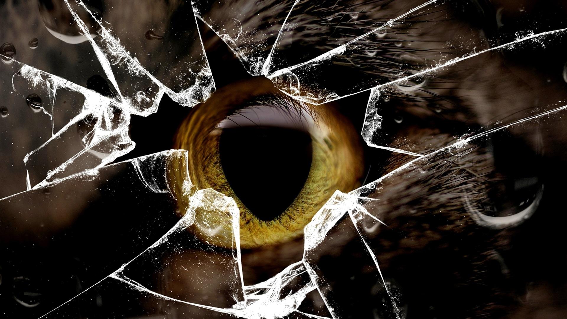 猫的黄色眼睛,玻璃破碎 壁纸 - 1920x1080 全高清图片