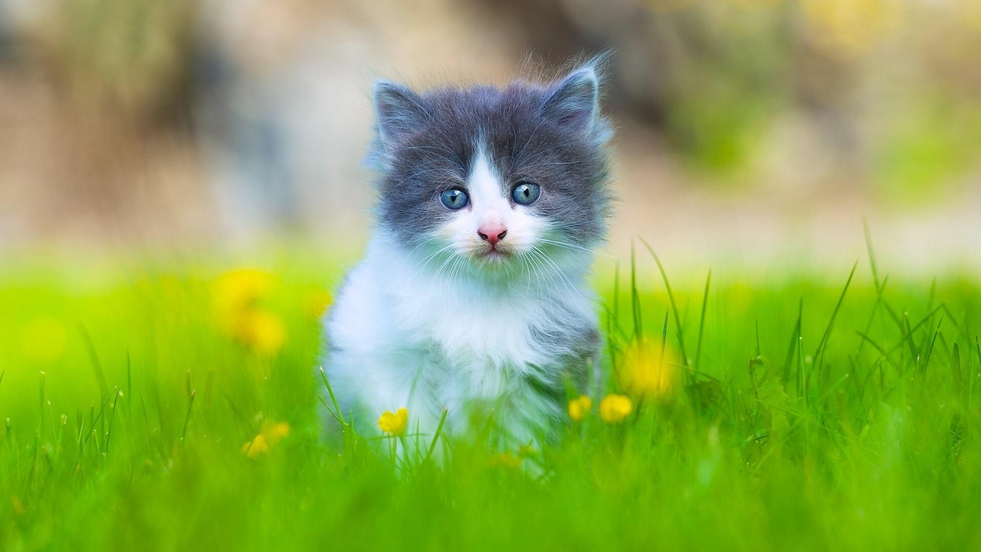 Котенок в мелкой траве  № 2954058  скачать