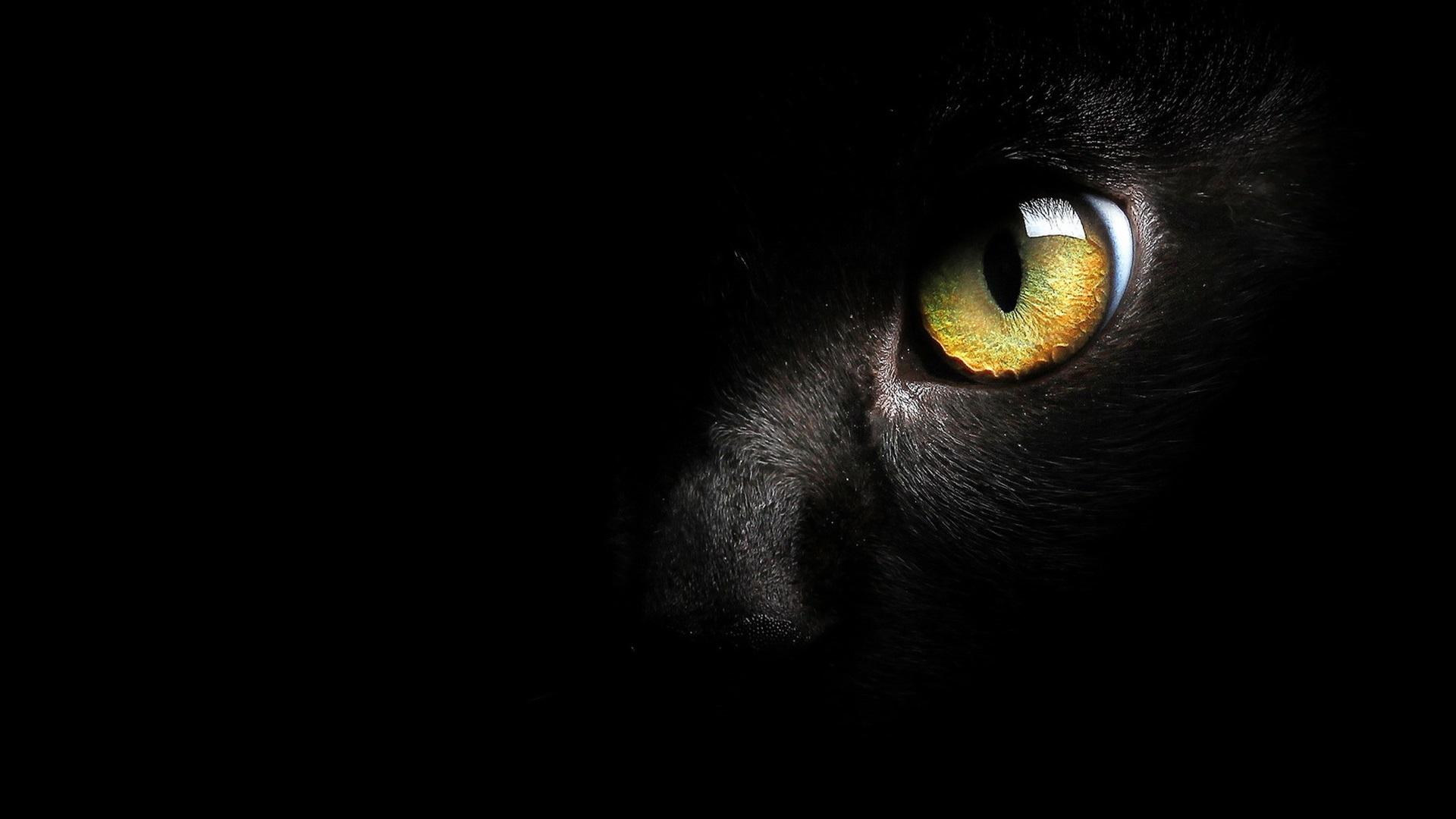 Fondos De Pantalla Cara De Gato Negro, Ojo Amarillo