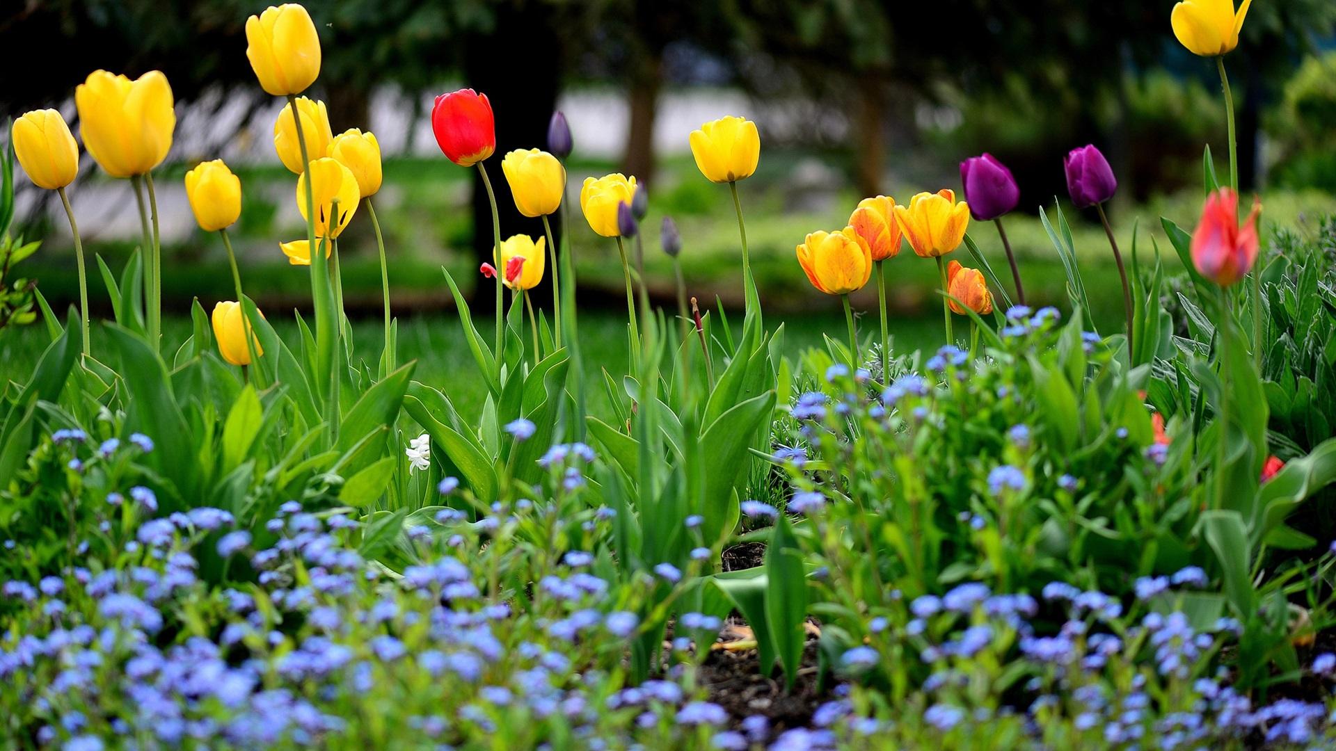 Jard n de flores primavera tulipanes amarillo rojo for Jardines de primavera