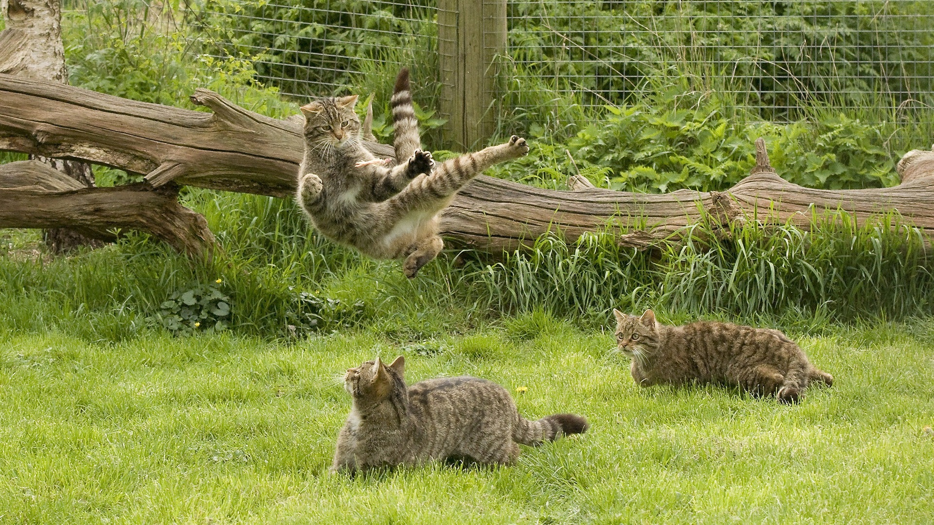 Resultado de imagem para Gatos na cerca