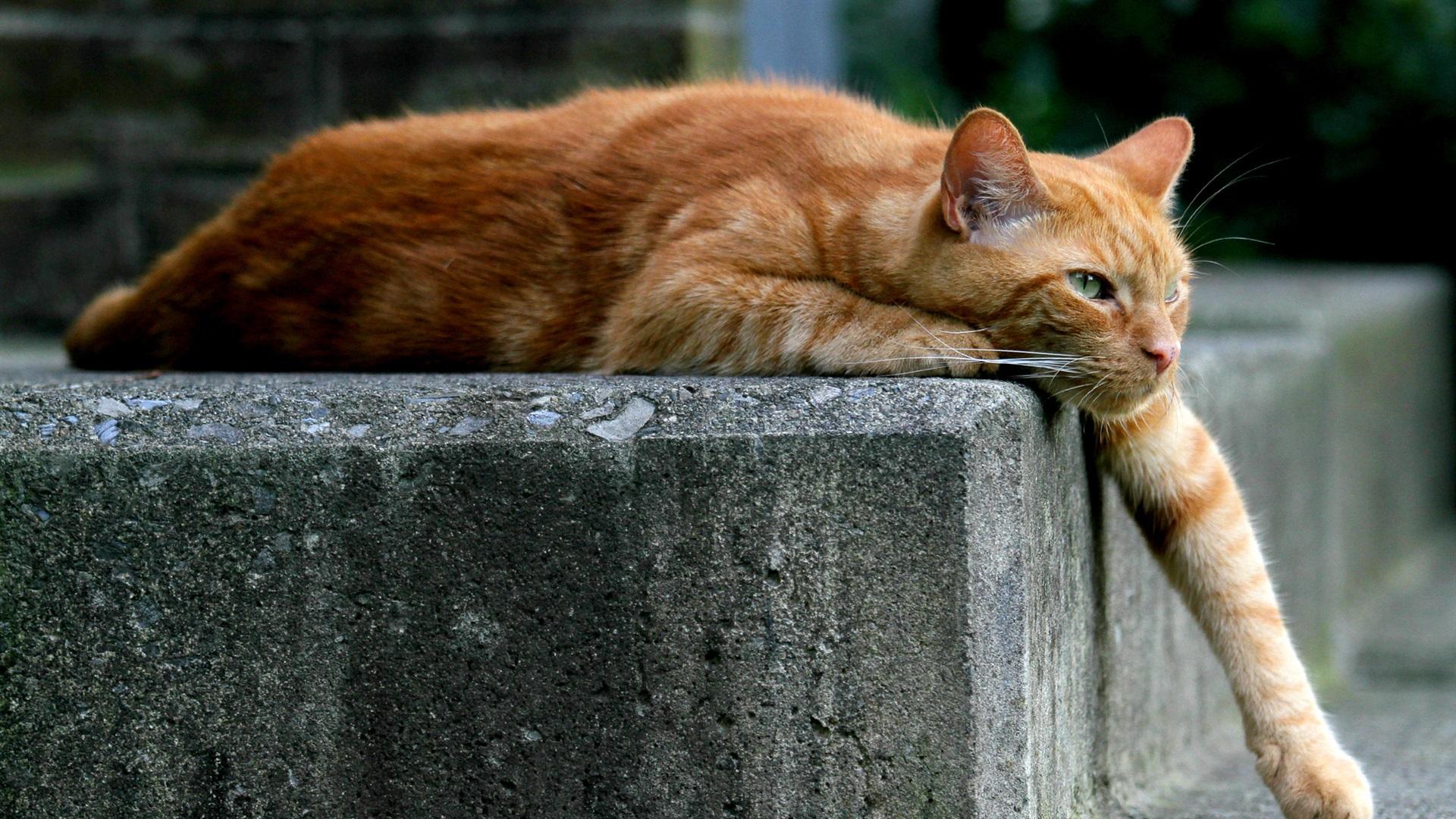 Gato Perezoso Fondos De Pantalla