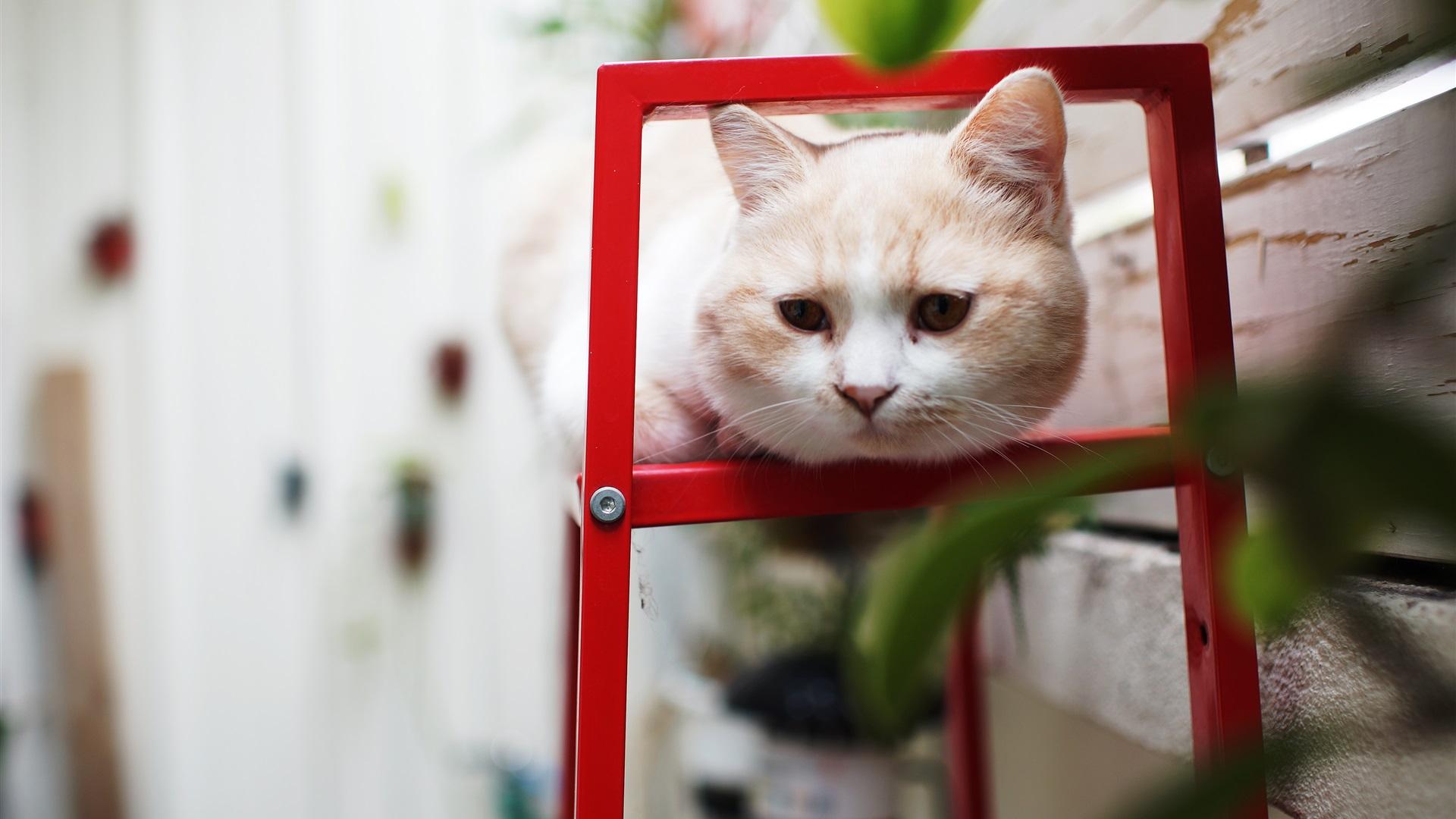 коты сфинкс обои на рабочий стол