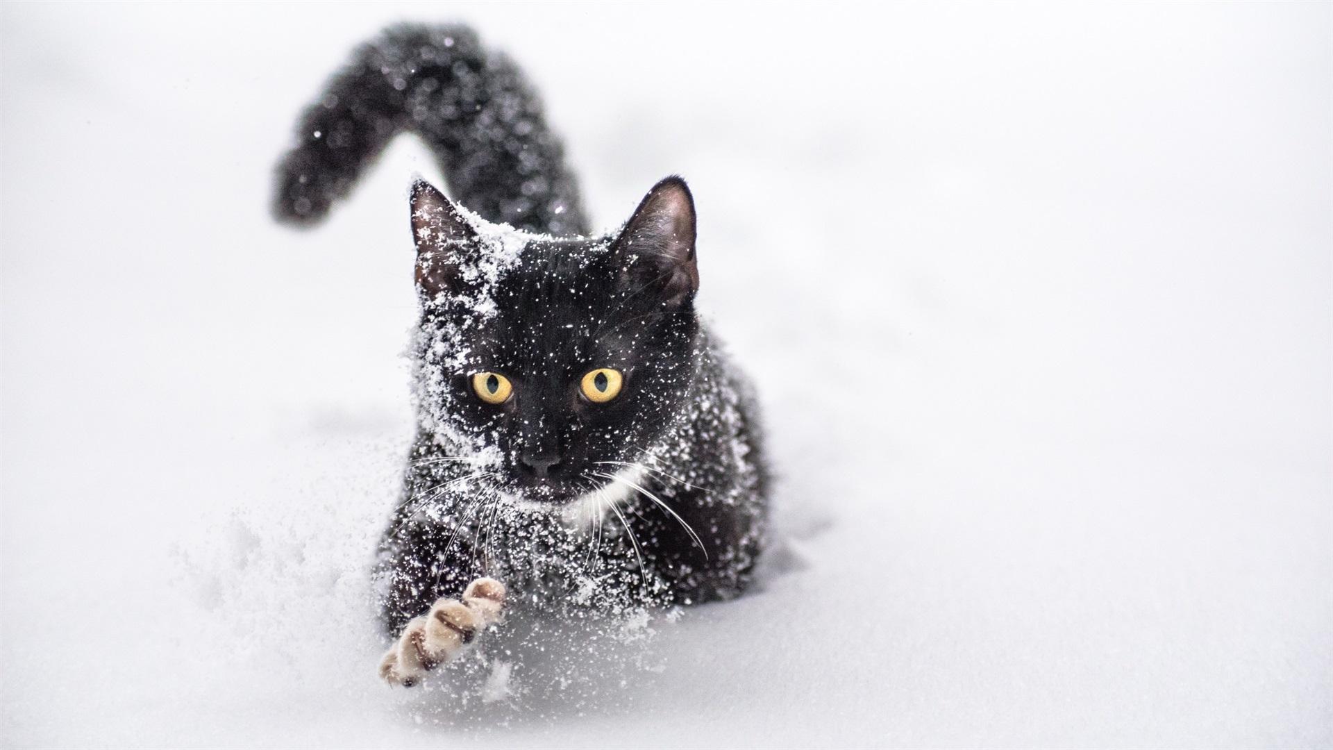 картинка черная кошка в снегу одному стилю