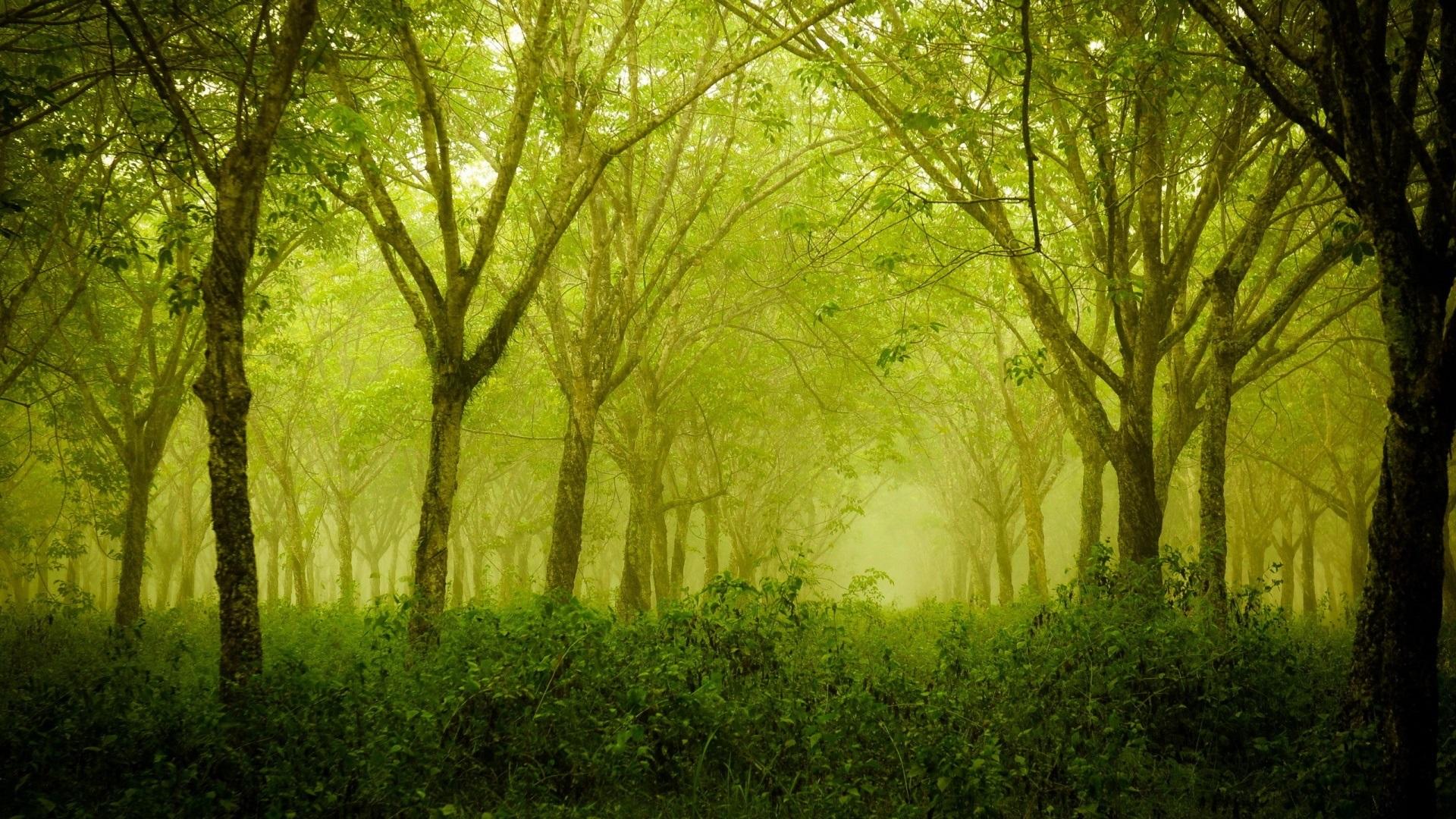 壁紙 霧の森 緑 木 1920x1080 Full Hd 2k 無料のデスクトップの背景