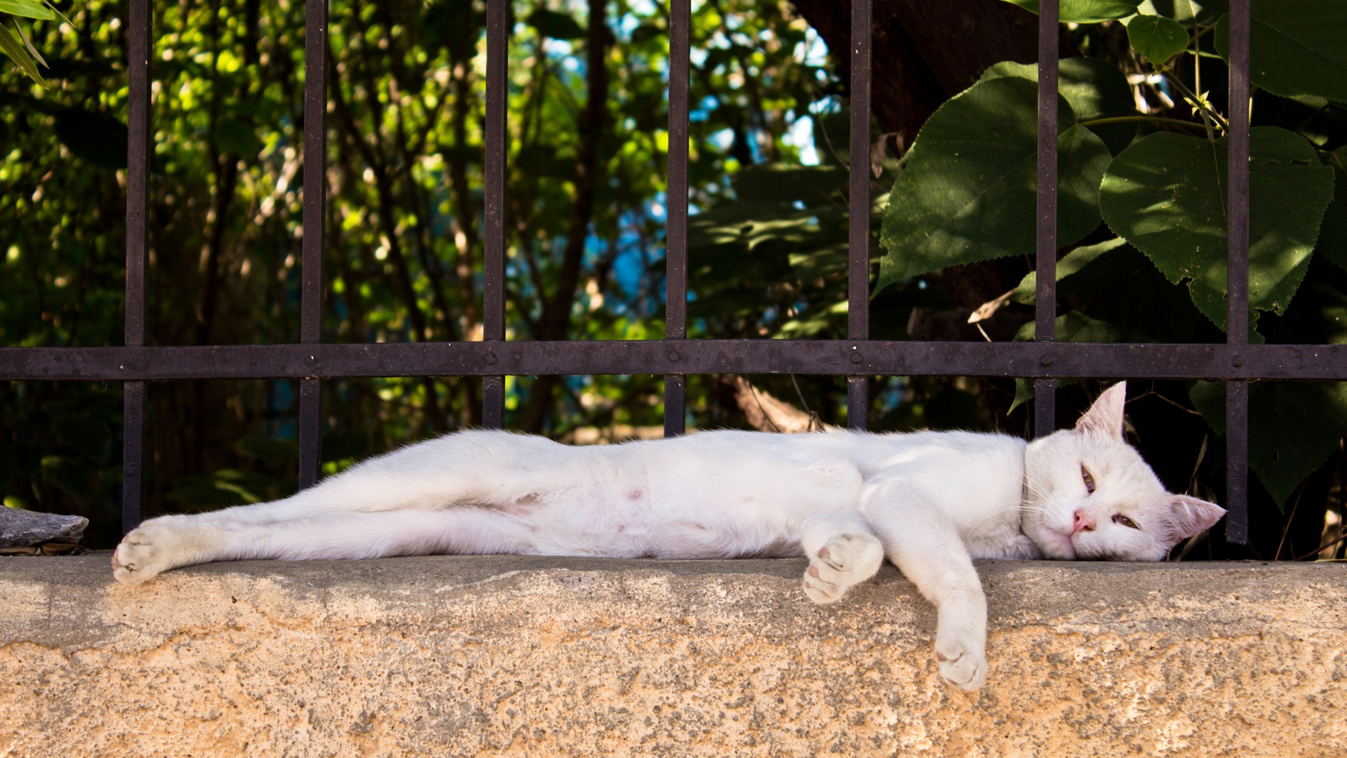 Wallpaper White Cat Lying On Fence Side 1920x1200 Hd Picture Image
