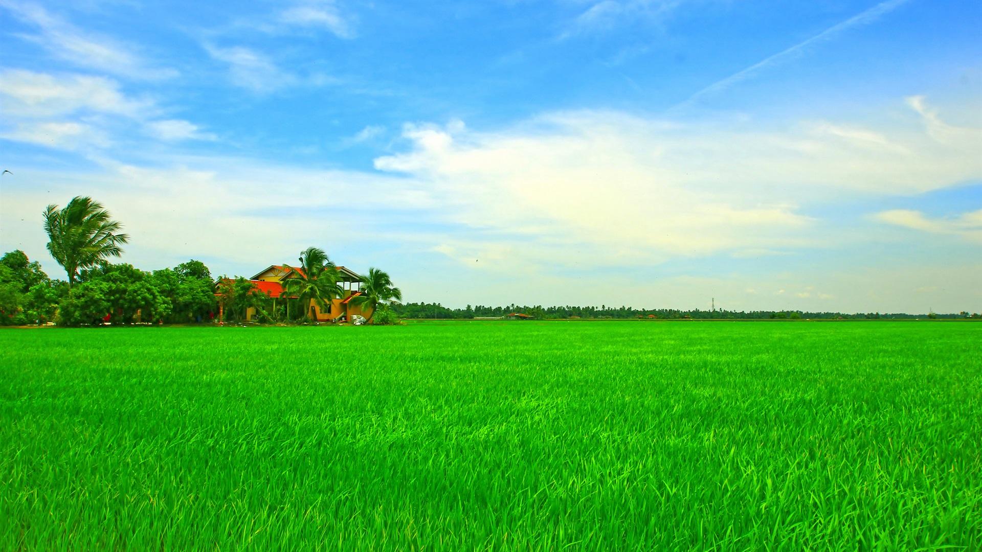 hermoso paisaje tropical asi tico casa campo verde