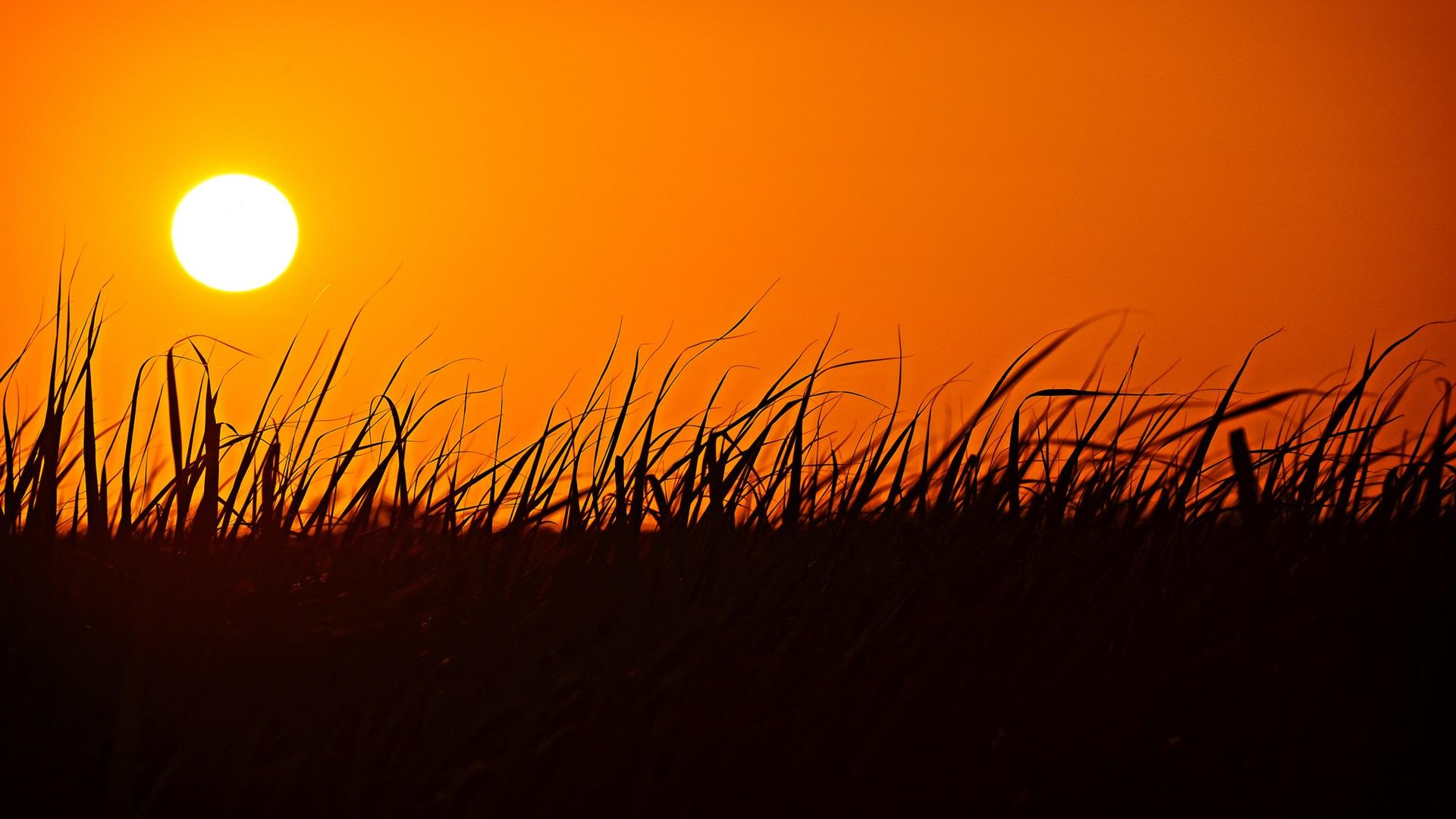 Grass, silhouette, sunset, orange sky Wallpaper ...