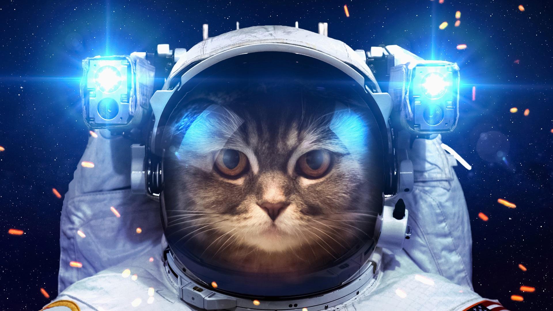 Humor Cat As A Astronaut Space Light Wallpaper