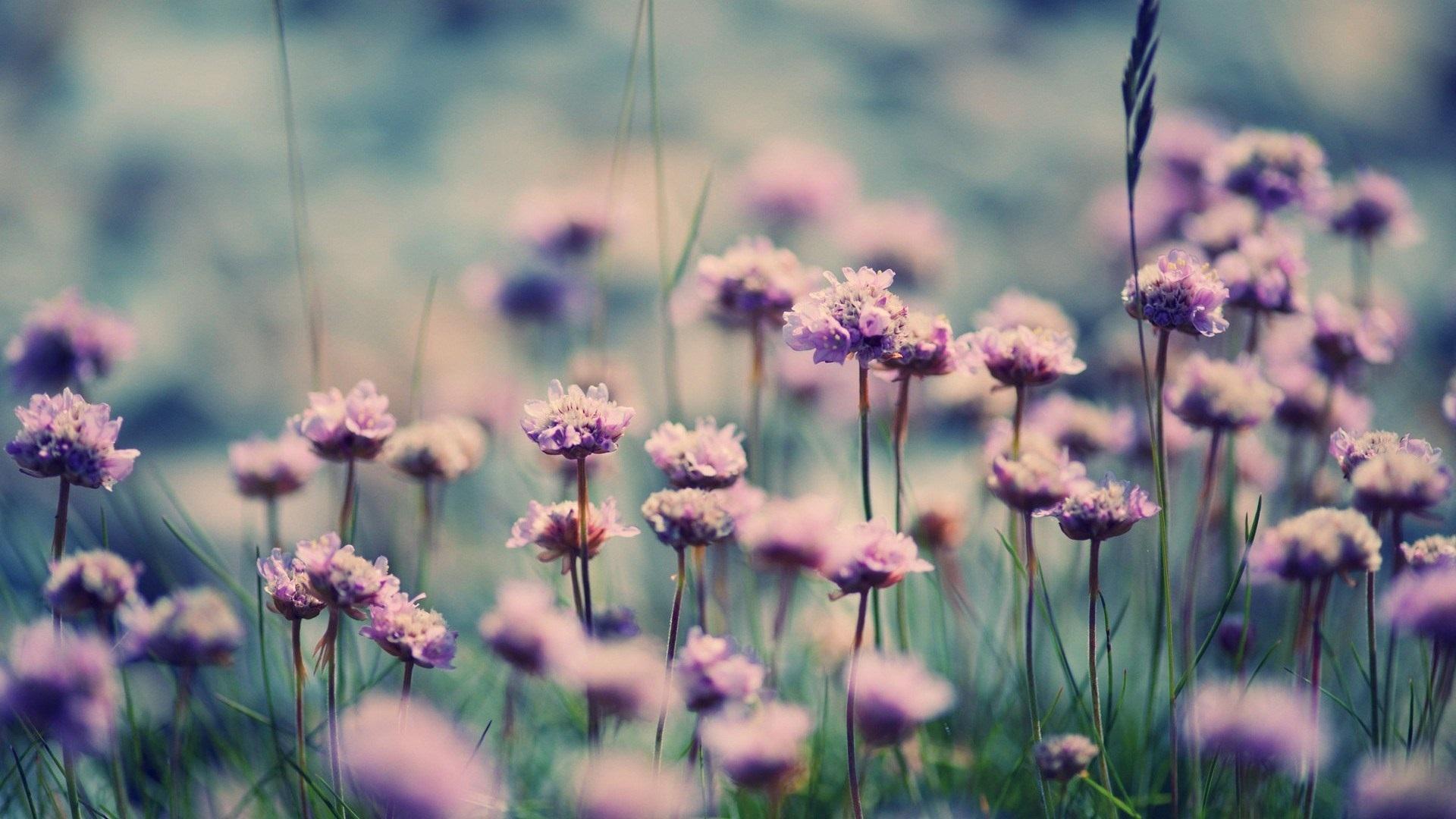 Wallpaper Little Purple Flowers Field Grass 1920x1080 Full Hd 2k