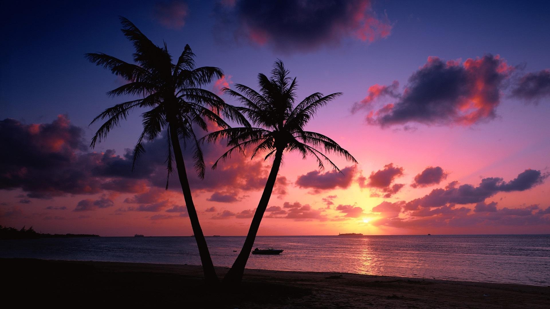 Sonnenuntergang Am Meer Mit Palmen