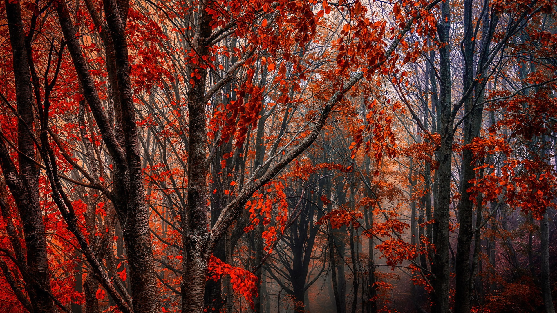 Autumn Forest Trees Red Leaves Fog Wallpaper