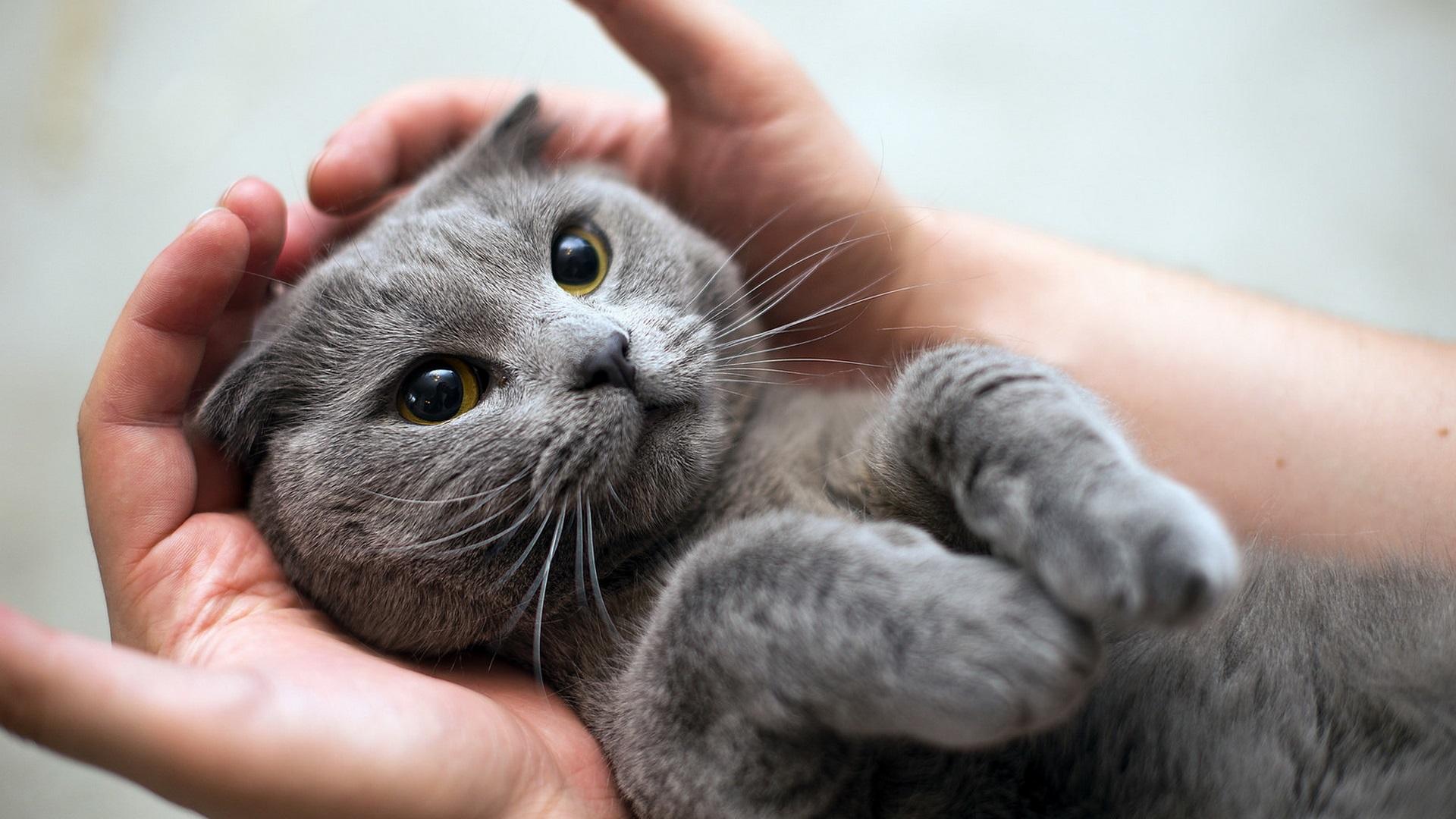 Серые котята в картинках