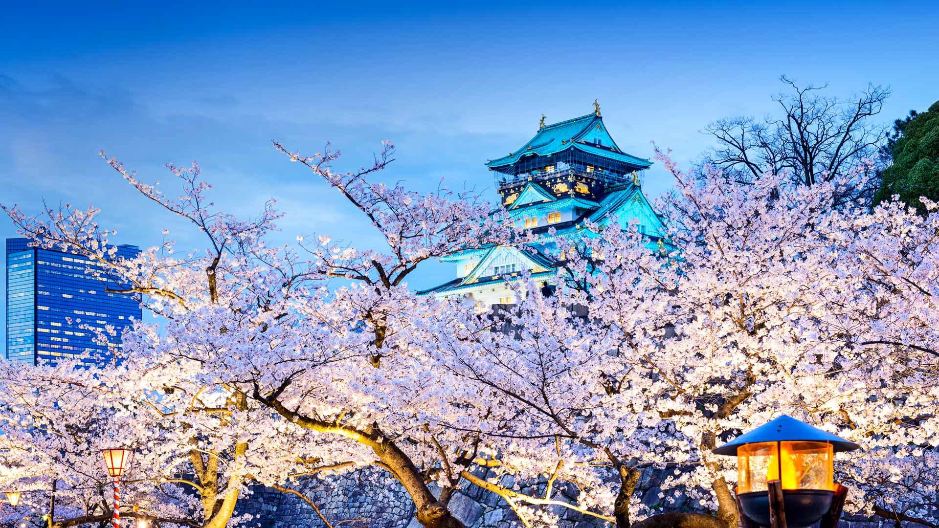 Японская сакура картинки